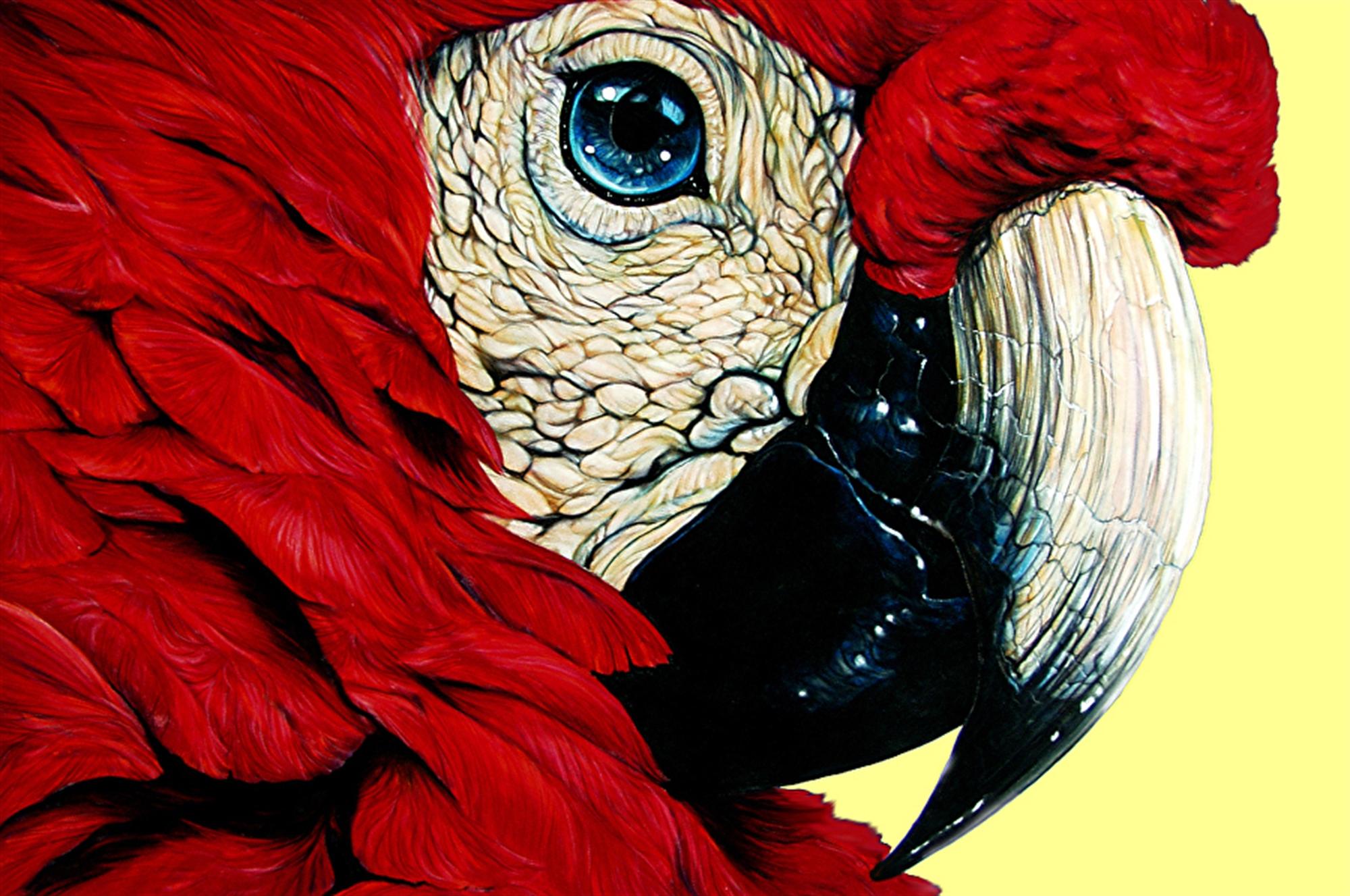 Scarlett O' Feather by D. Arthur