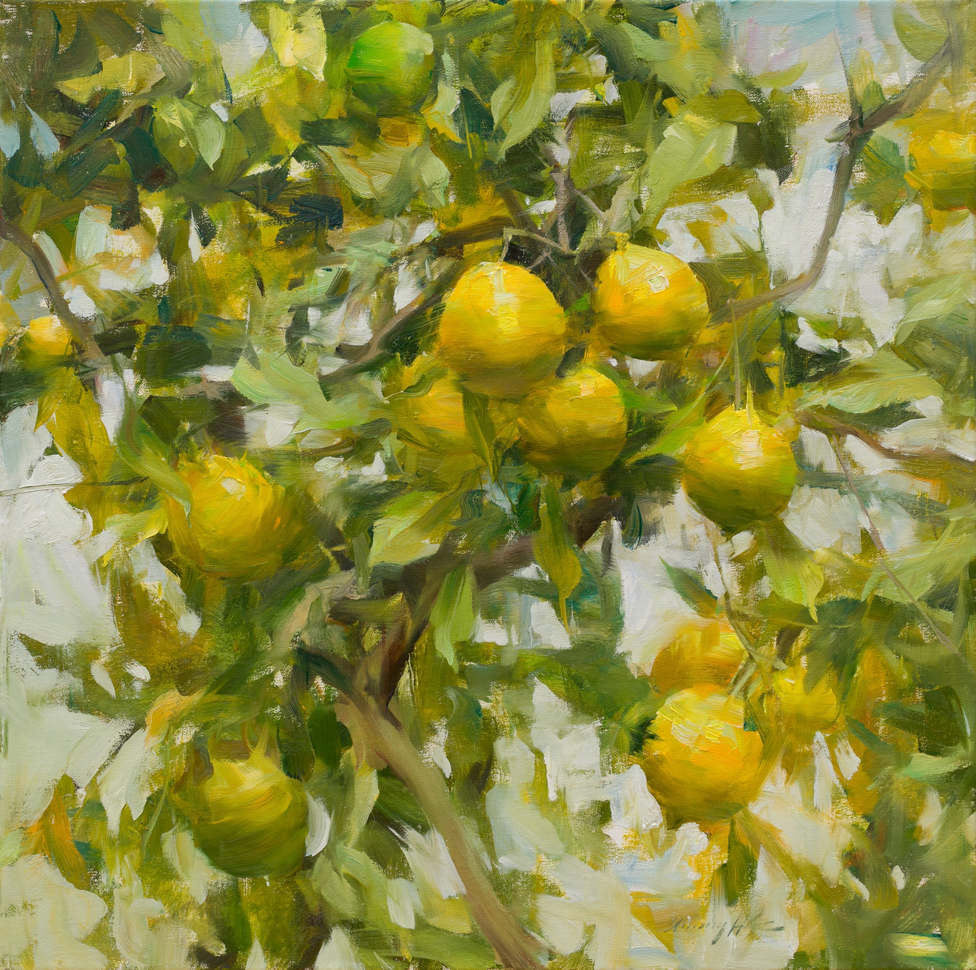 California Lemons by Quang Ho