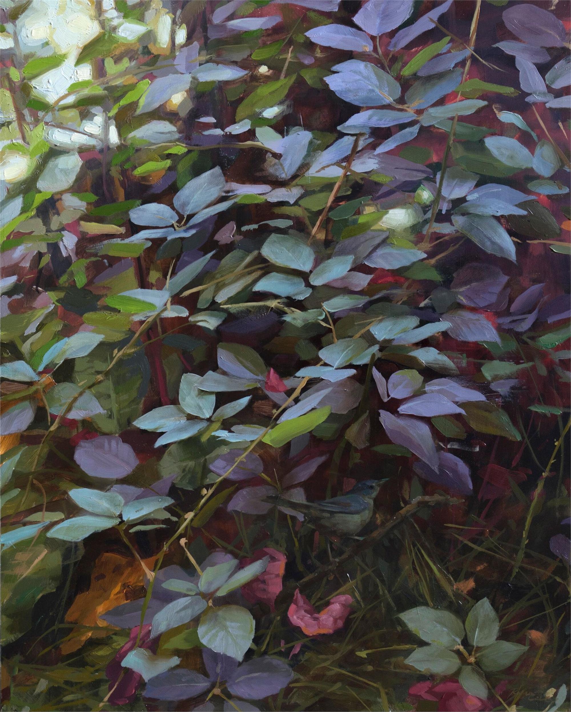 Shrike by Robin Cole