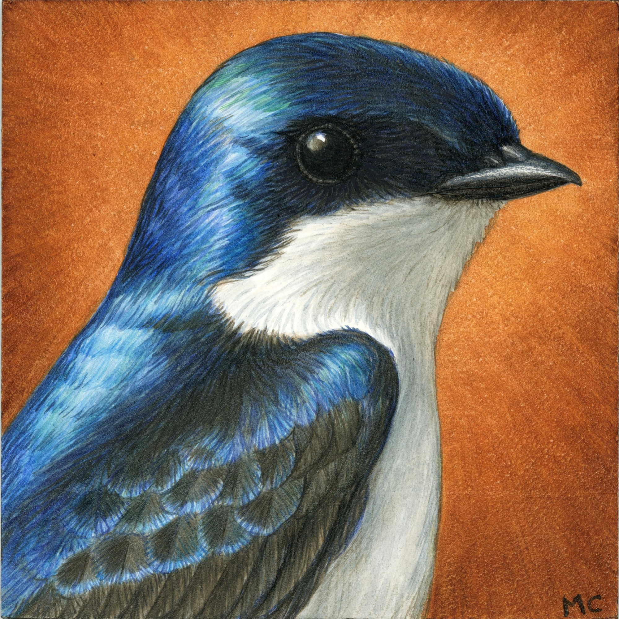 Tree Swallow by Margie Crisp