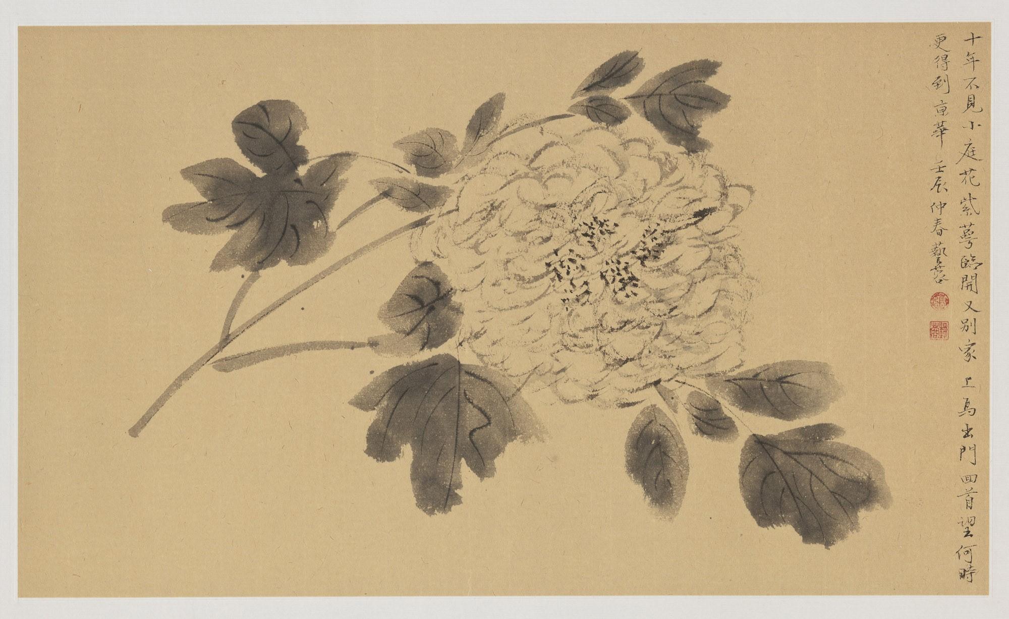 SINGLE PEONY BLOSSOM by Yirong Zhang