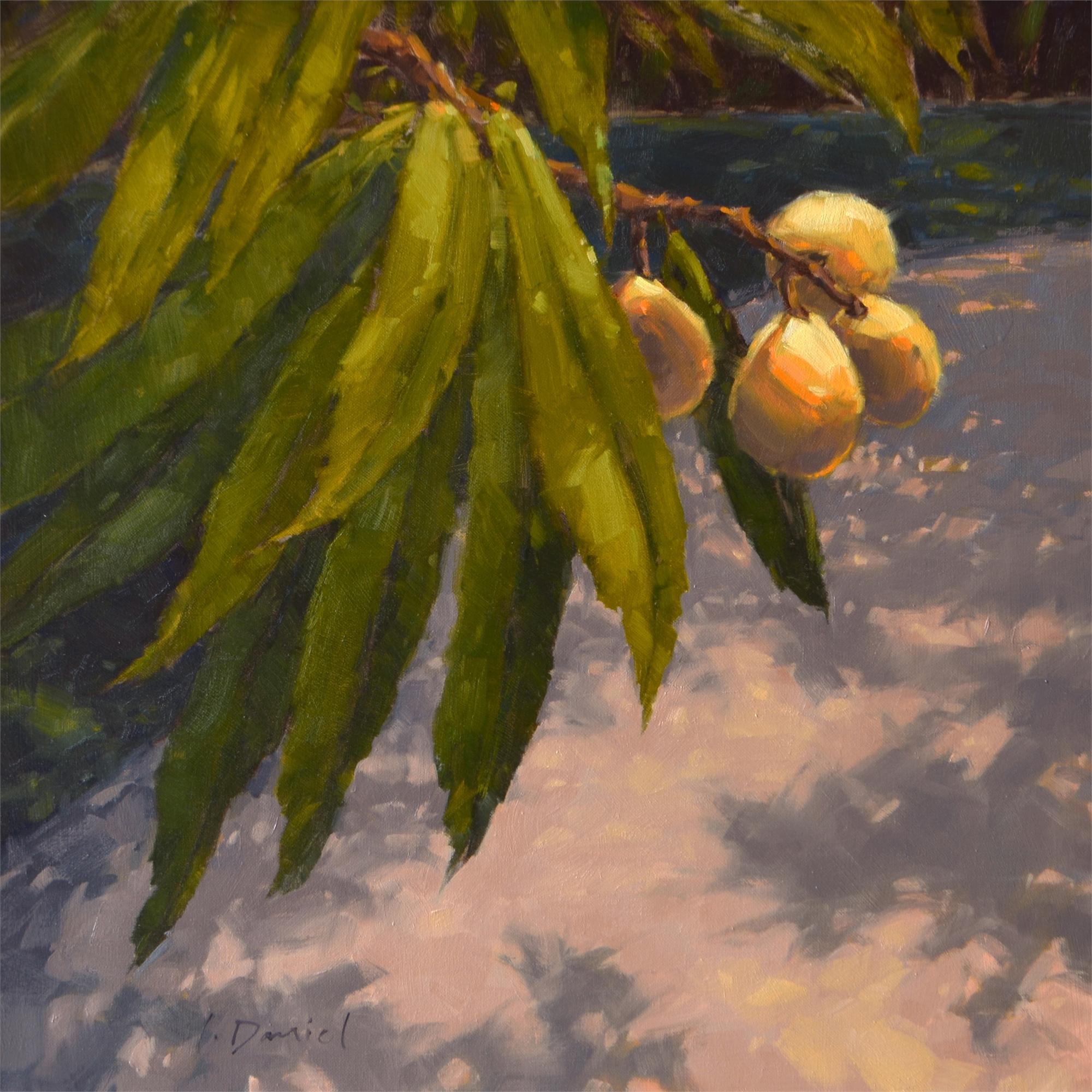 Nature's Patterns by Laurel Daniel