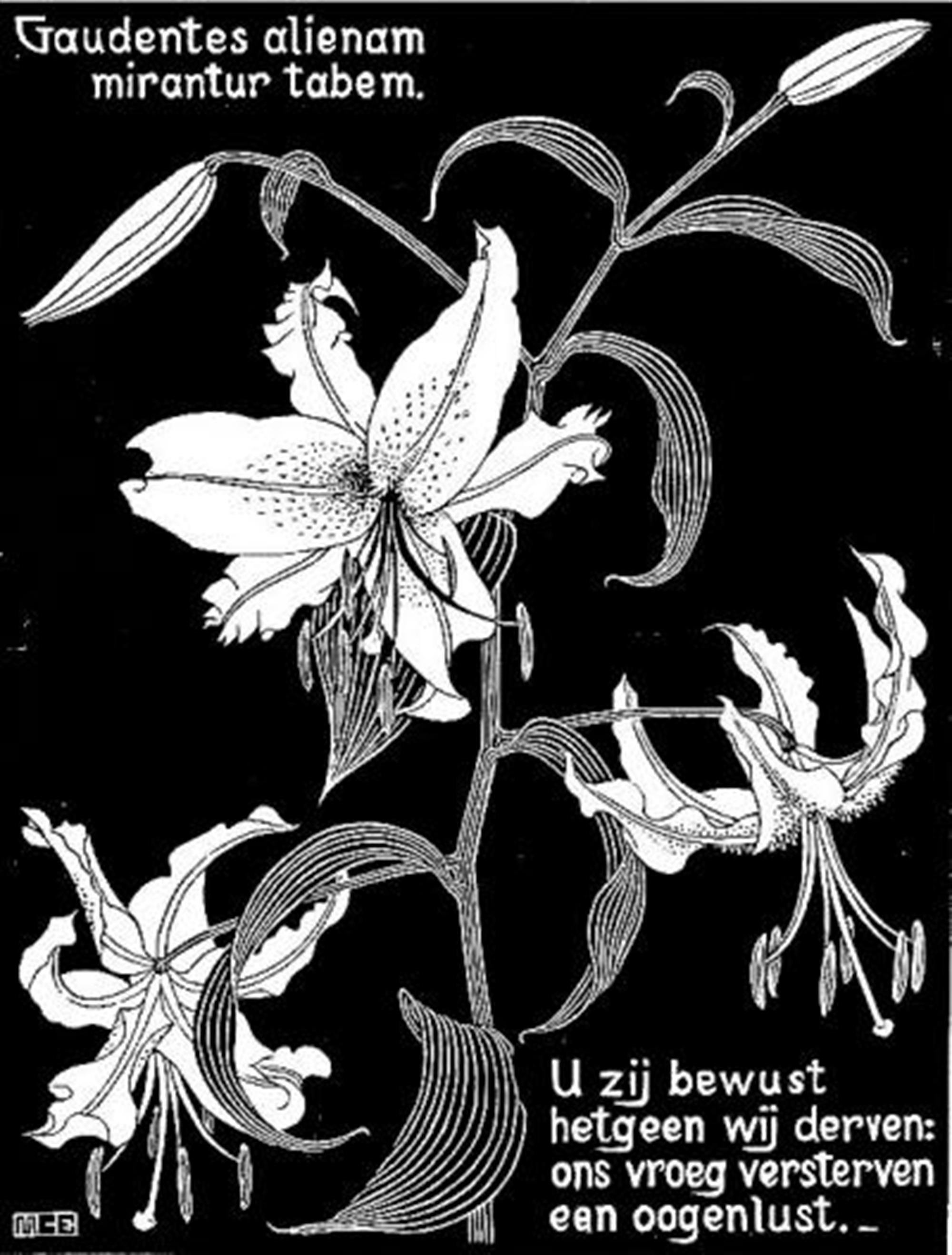 Flowers, Lilies by M.C. Escher