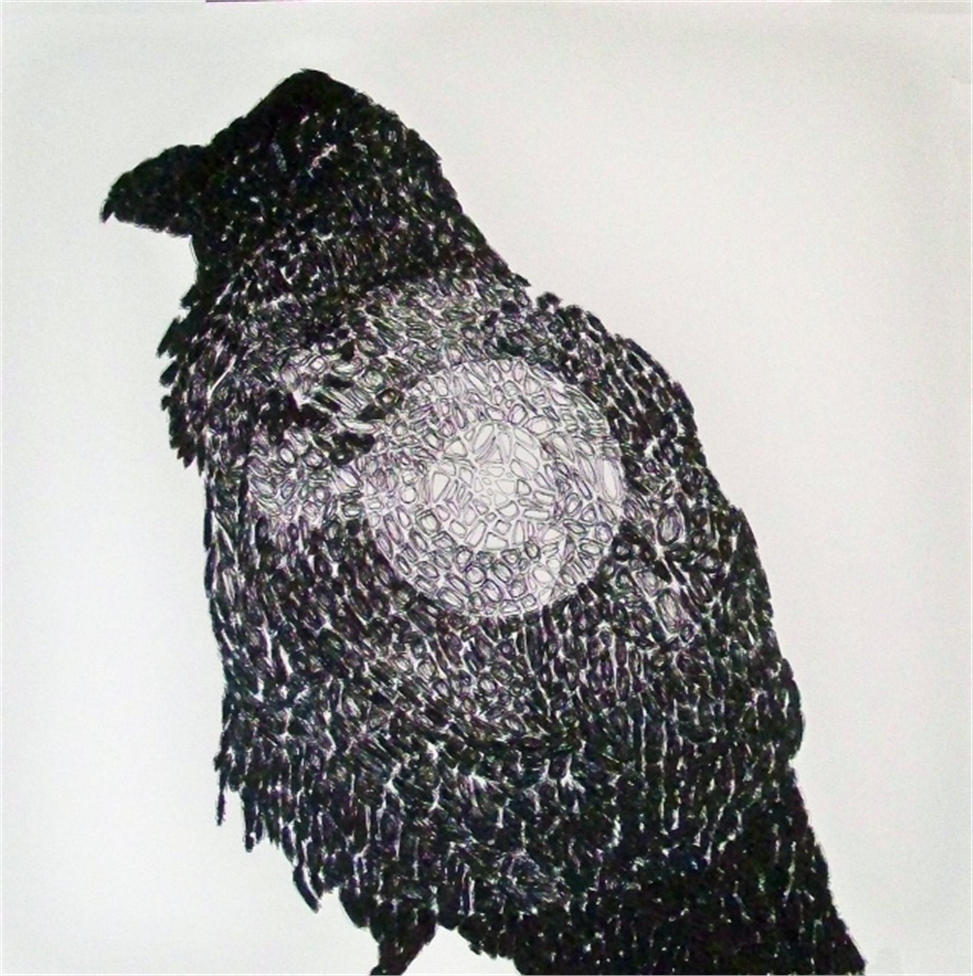 43,133 (Raven) by John Adelman