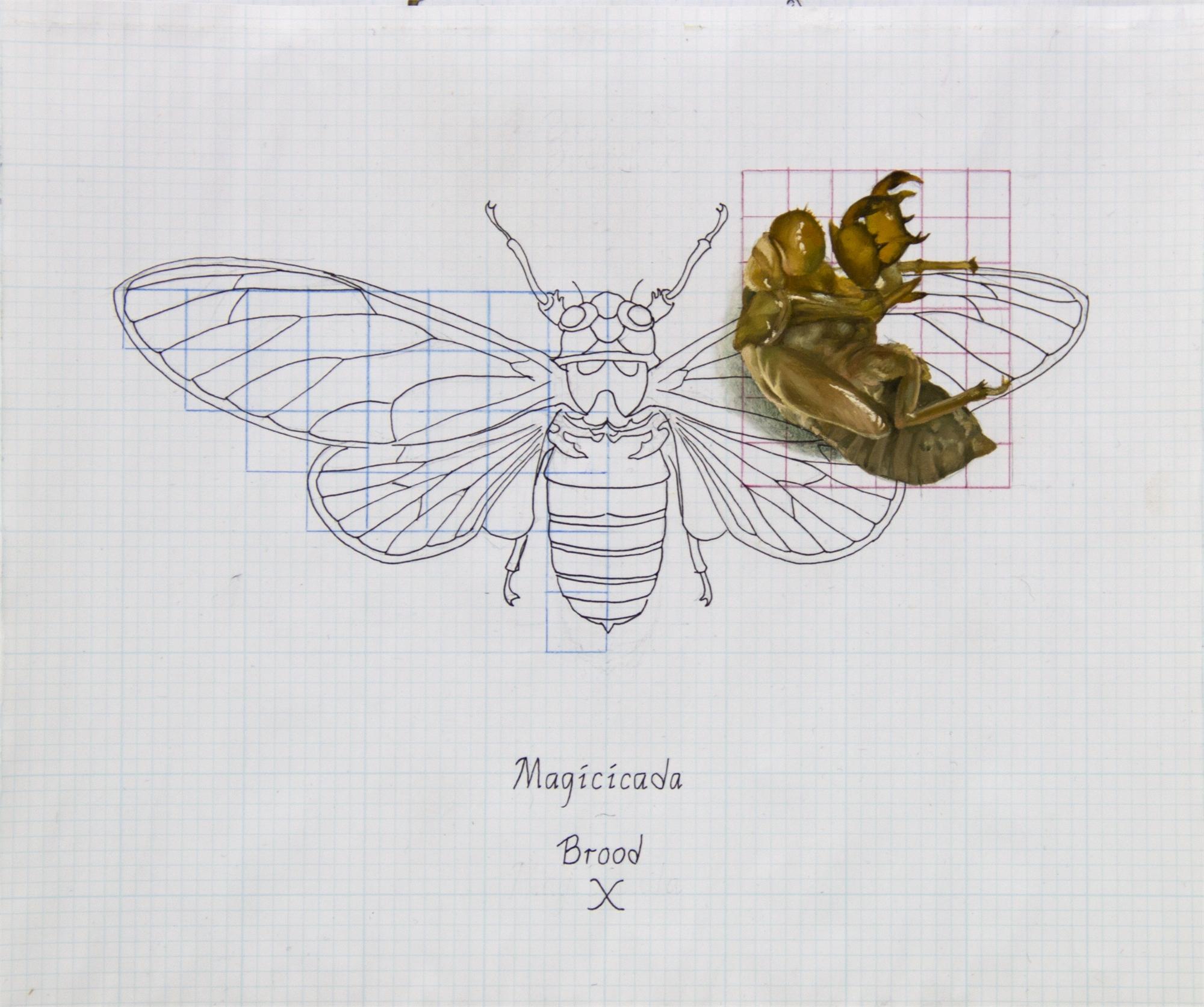 Magicicada Septemdecim by Zane York