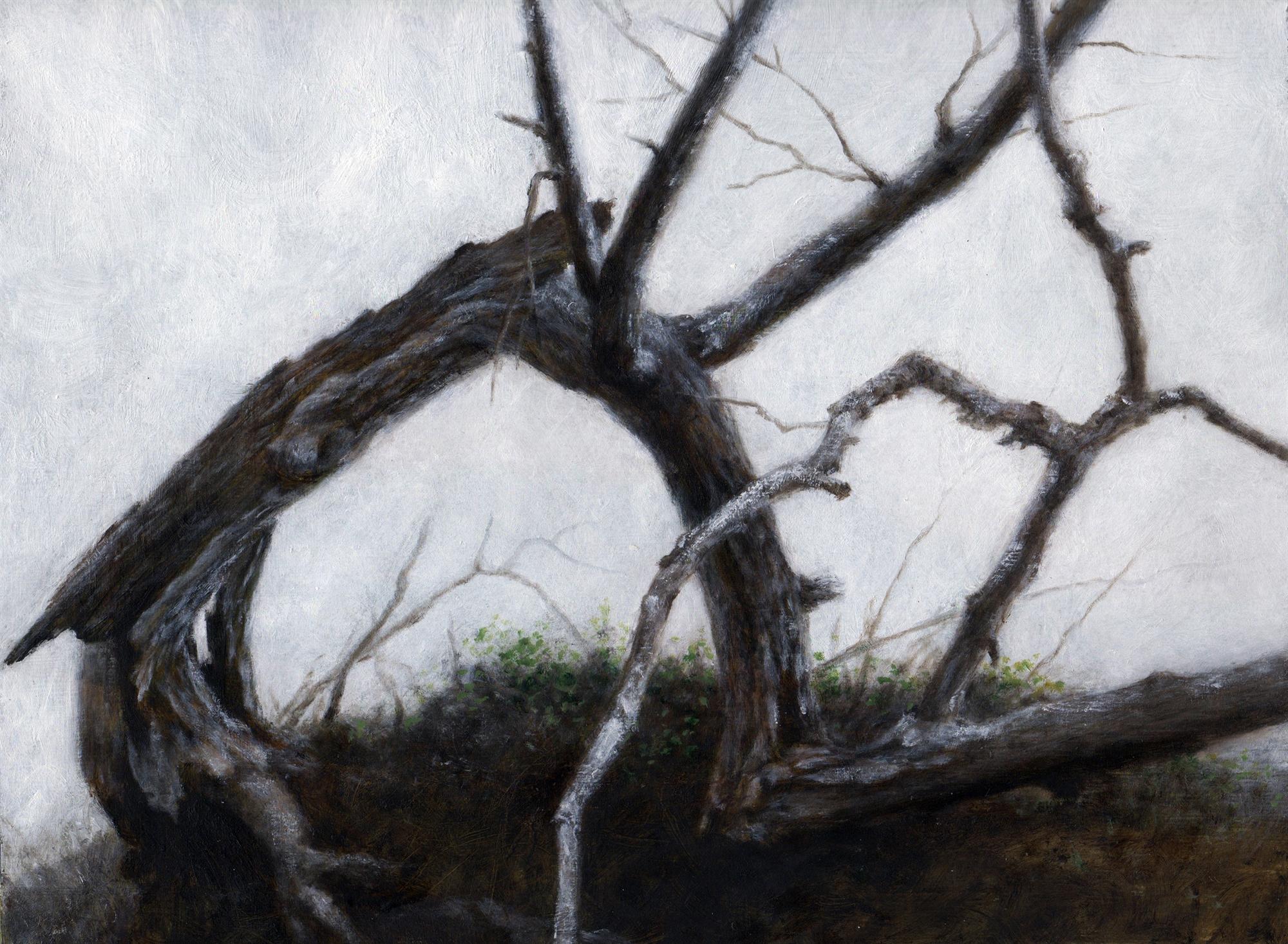 Windblown Tree by Lisa Lebofsky