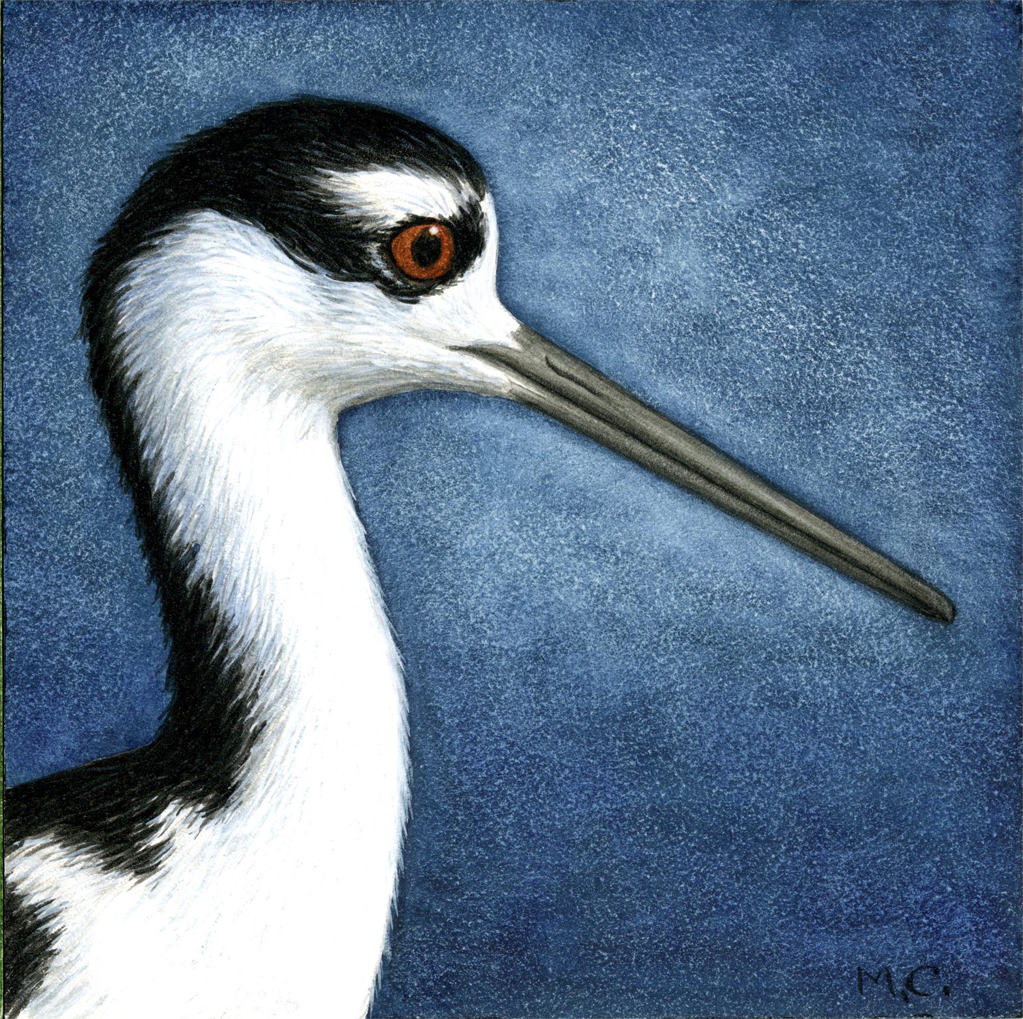 Black-necked Stilt by Margie Crisp