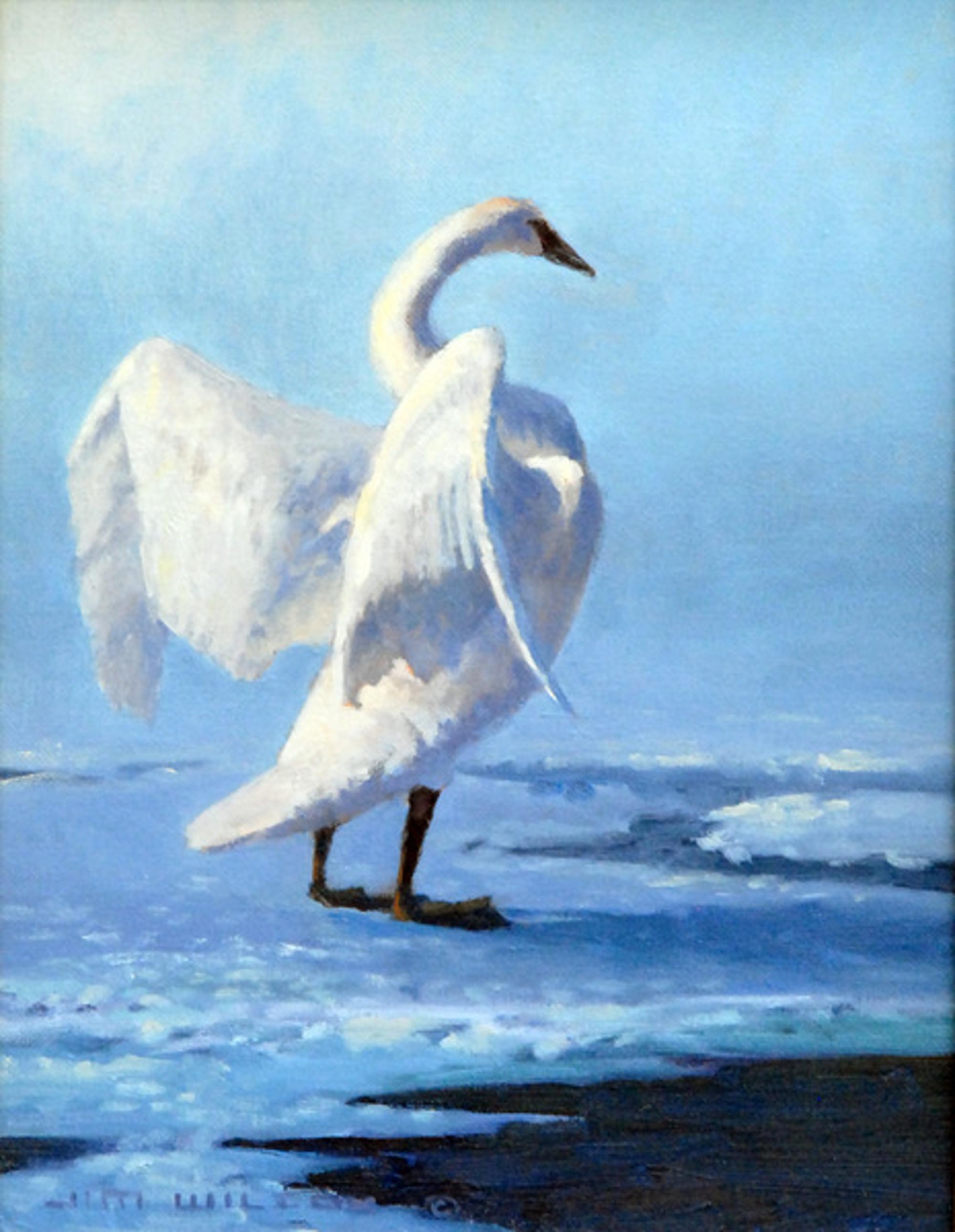 The Stretch Swan by Jim Wilcox