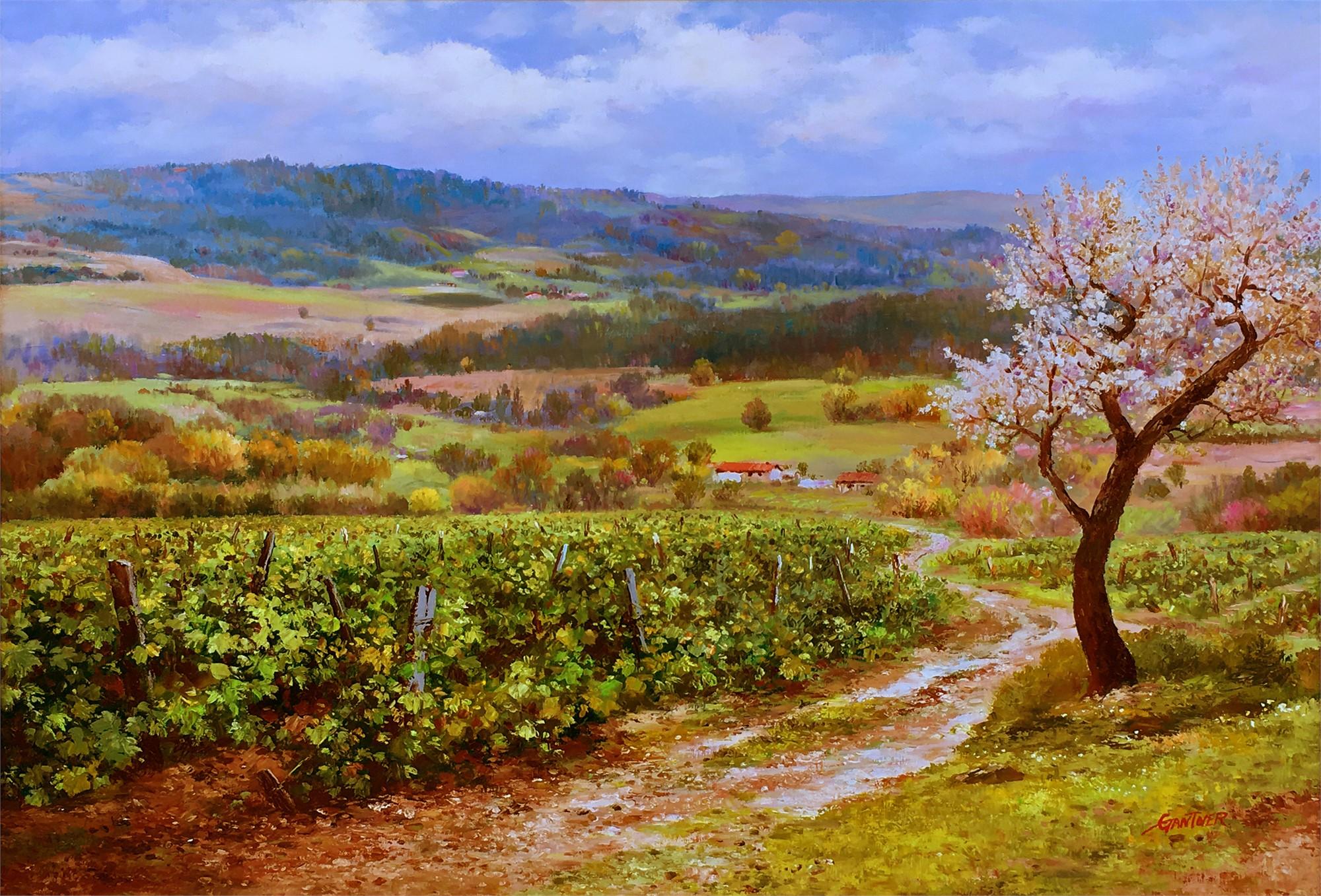 Vineyards of Tuscany by GANTNER