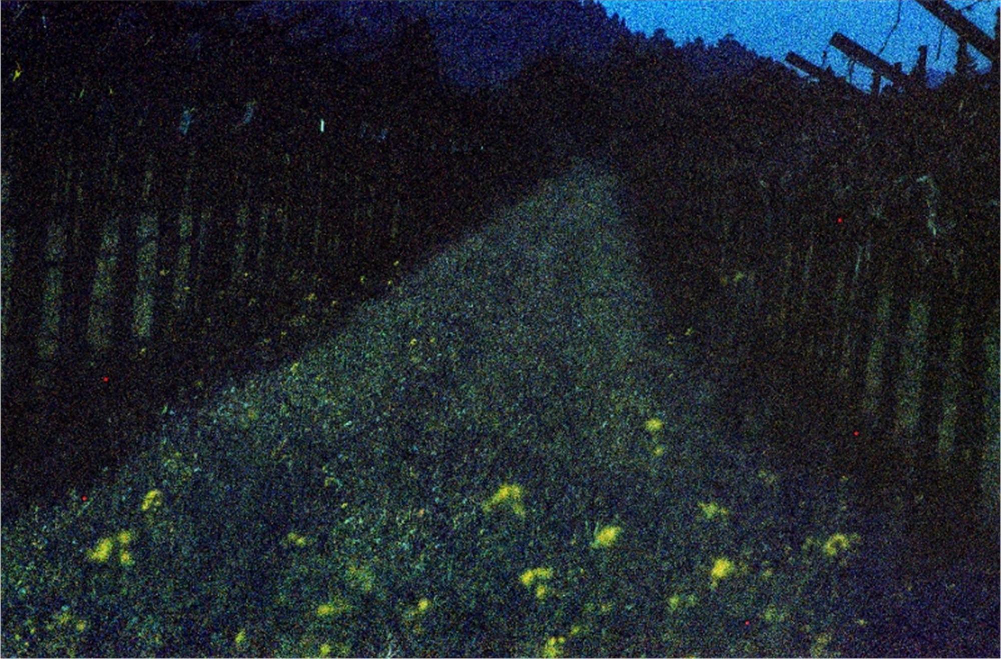 Abstract Vineyard by Sam Aslanian