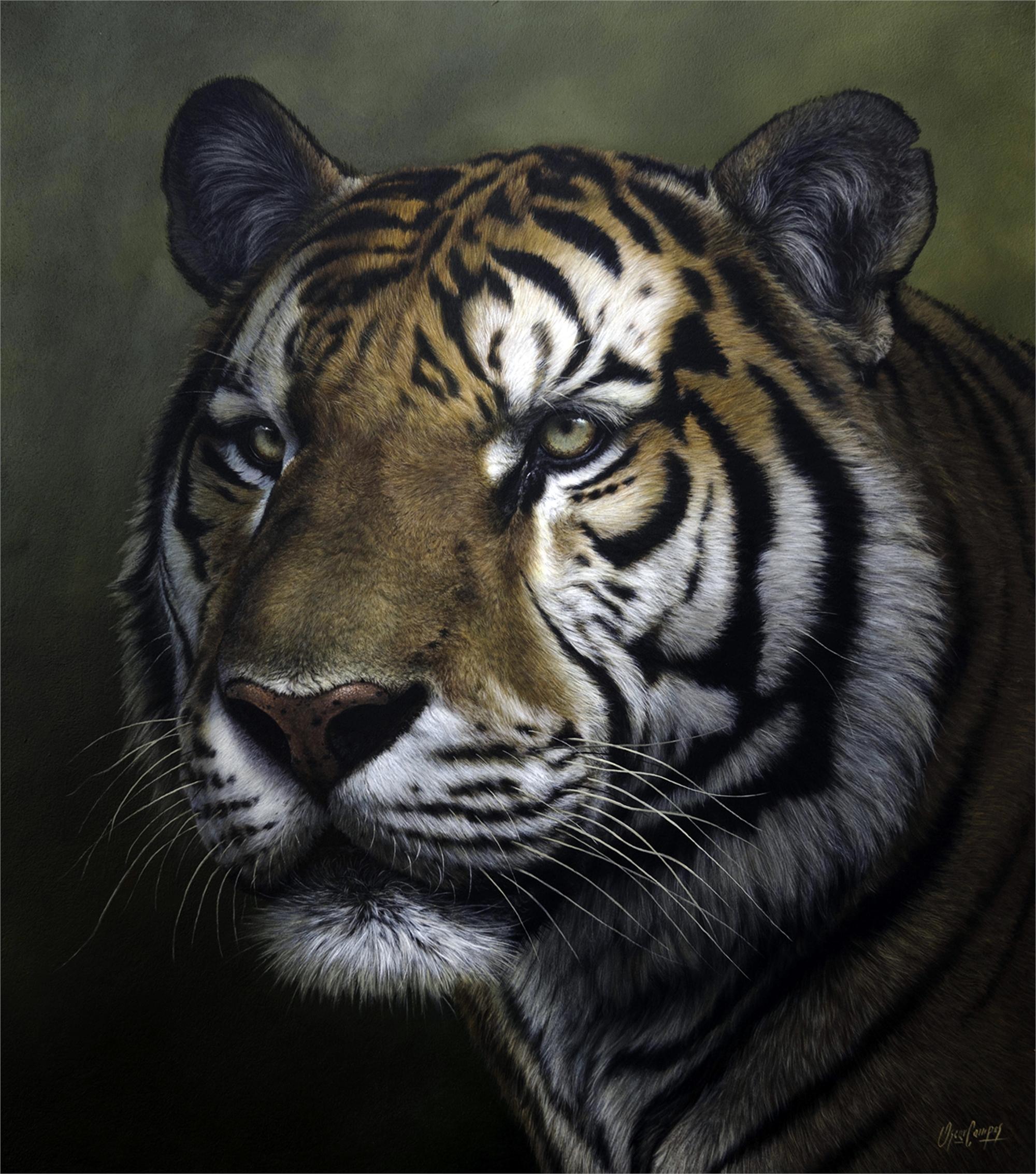 Tigre by Oscar Campos