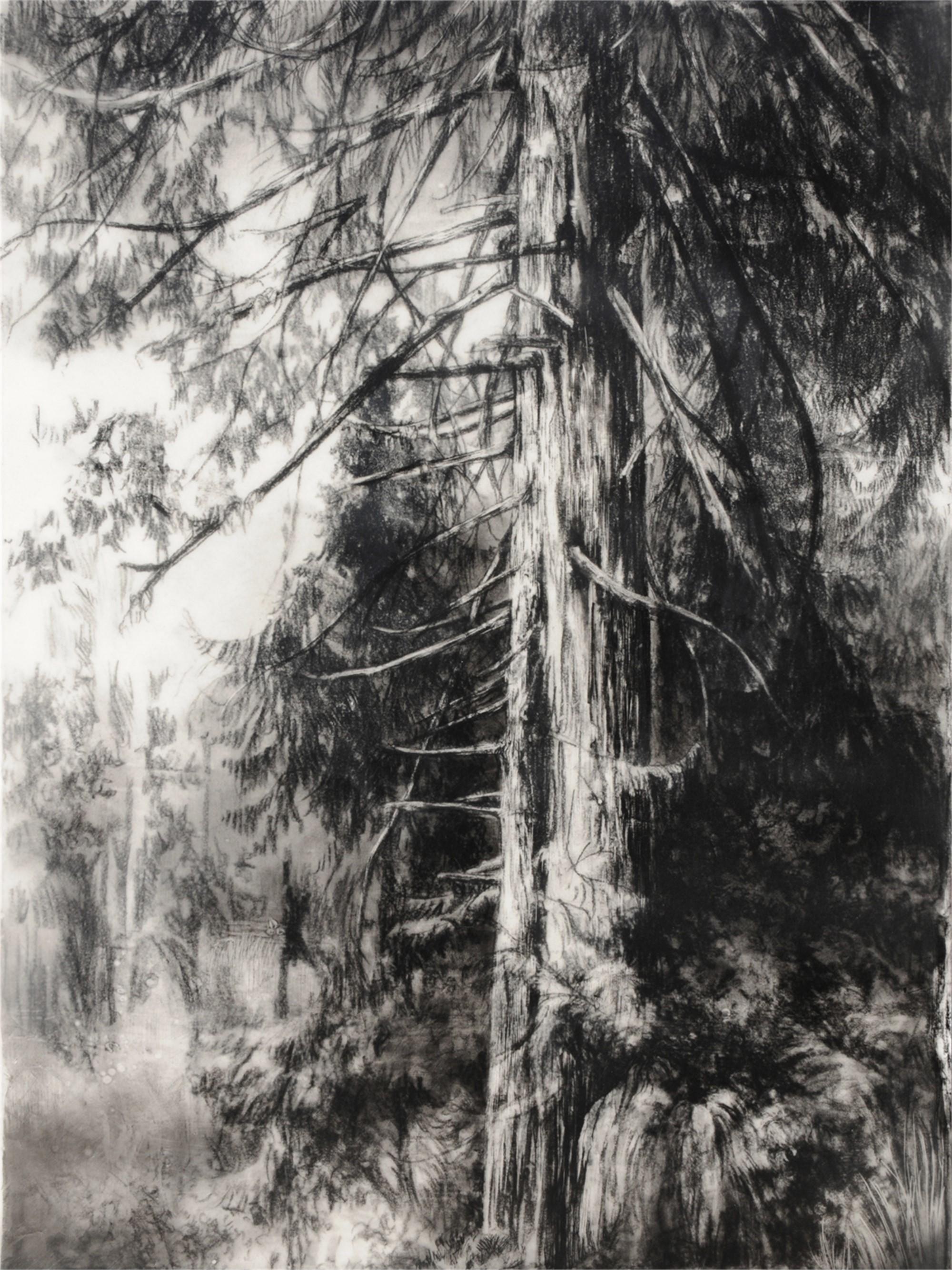 Hypatia's Woods I by Robin Cole