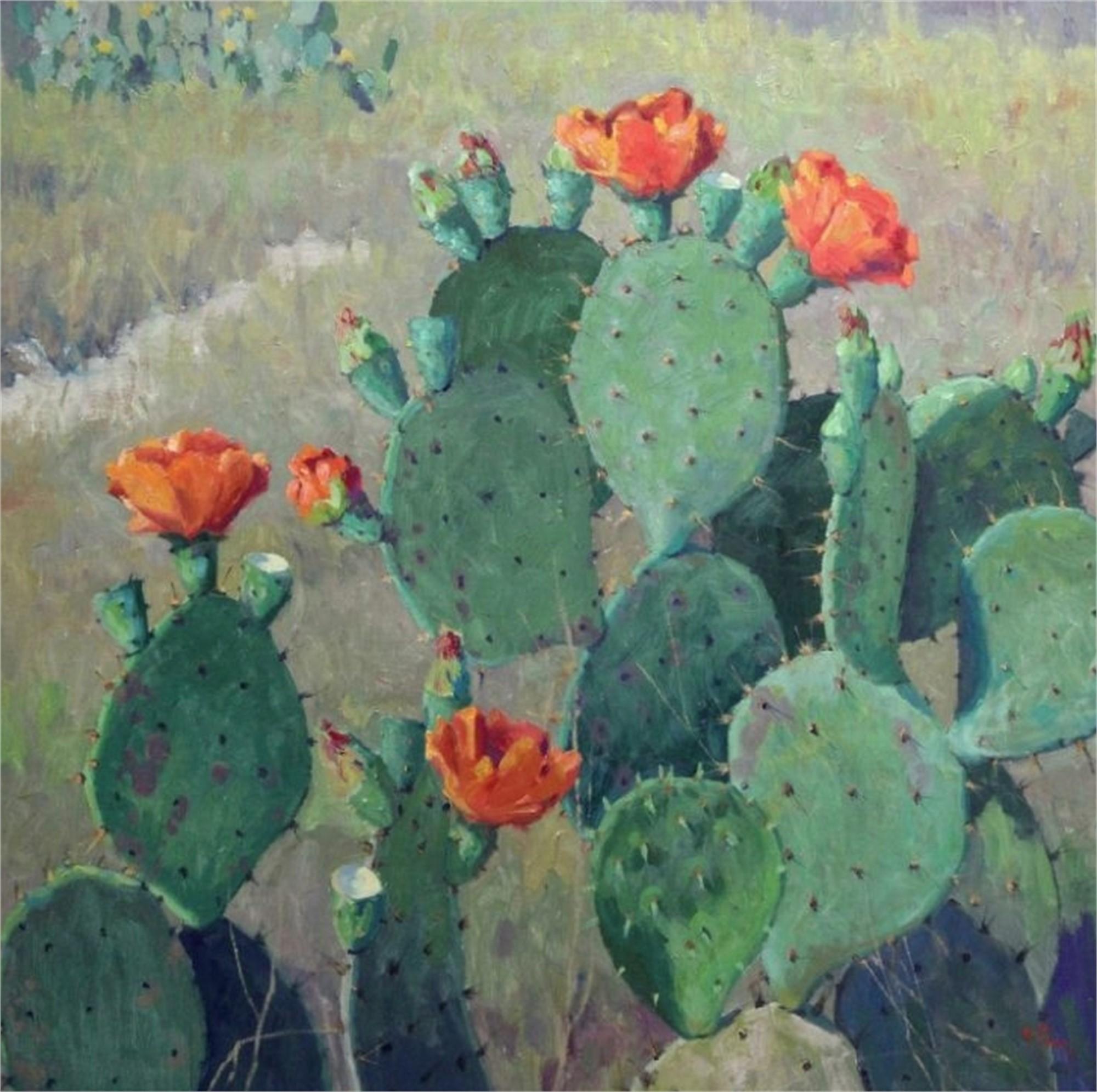Orange Cactus Blooms by Noe Perez