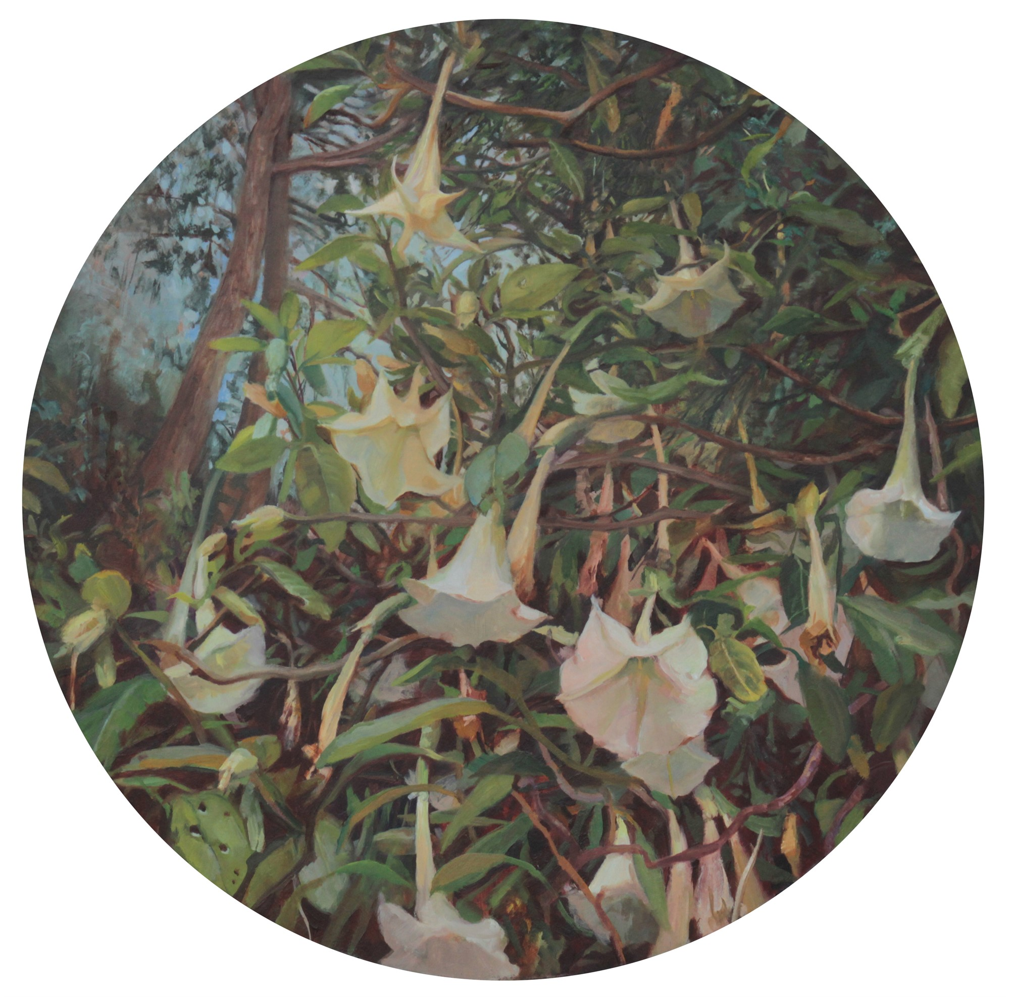 Datura in the Presidio by Linda Tracey Brandon