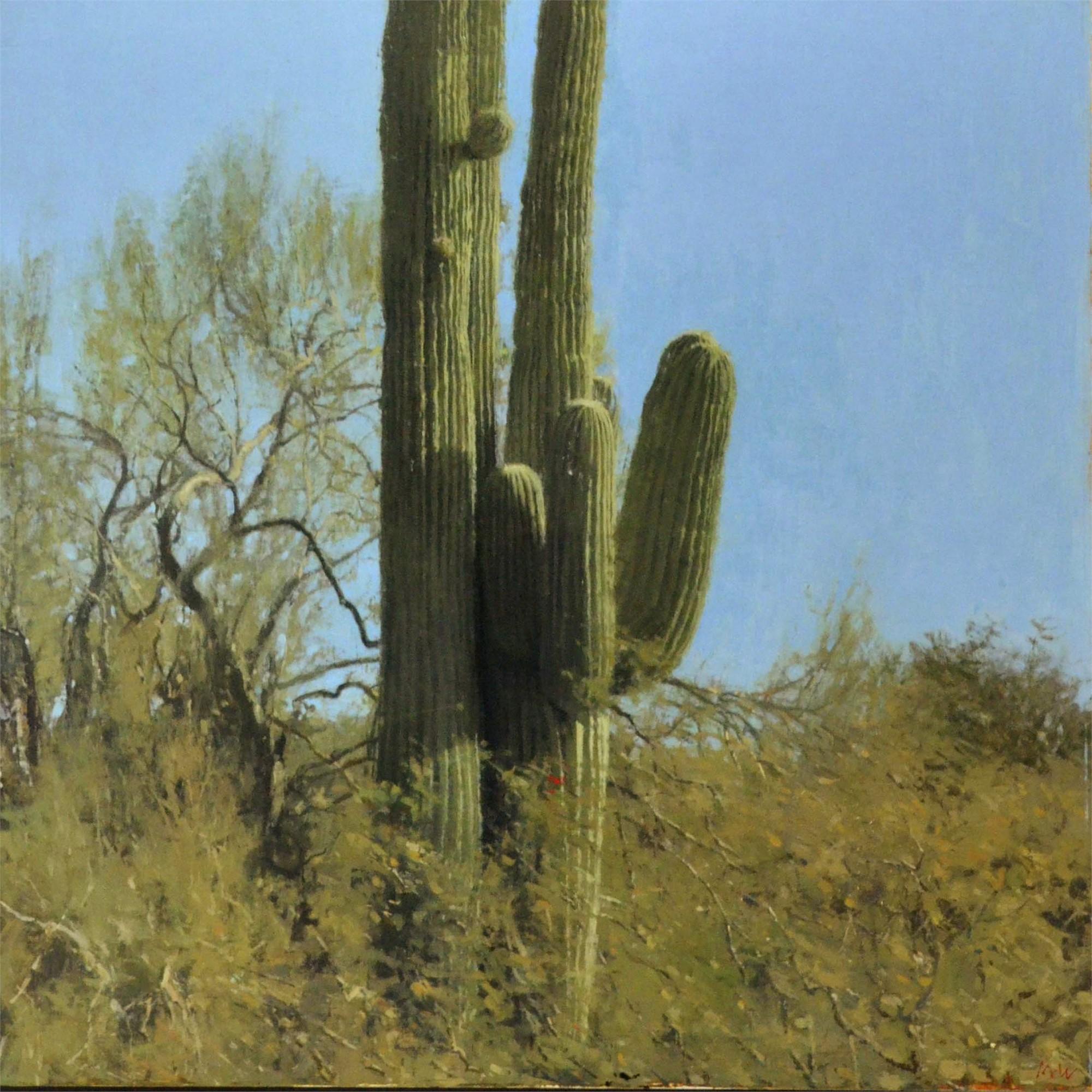 Saguaro by Michael Workman