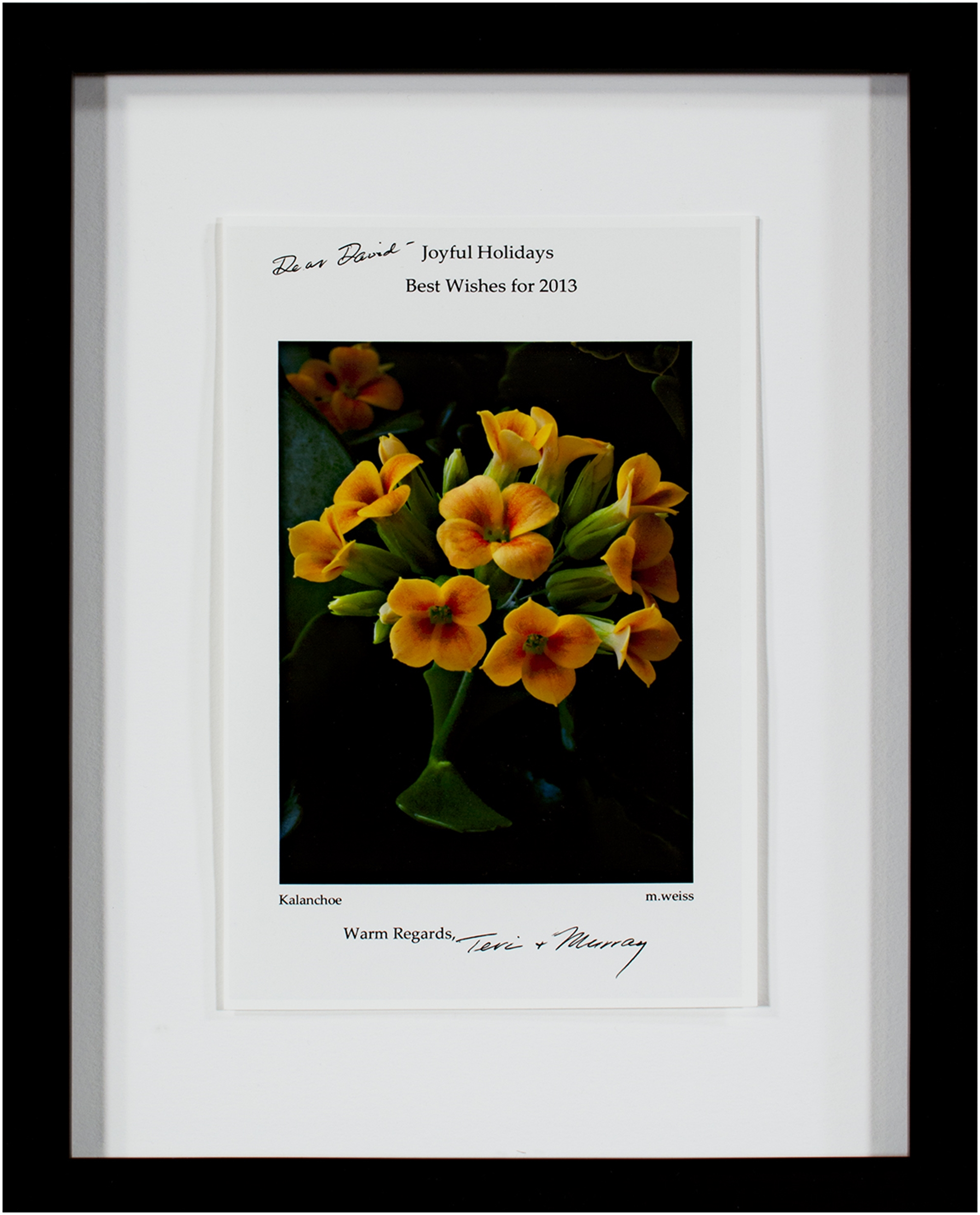 Kalanchoe (2012 Holiday Greeting Card) by Murray Weiss