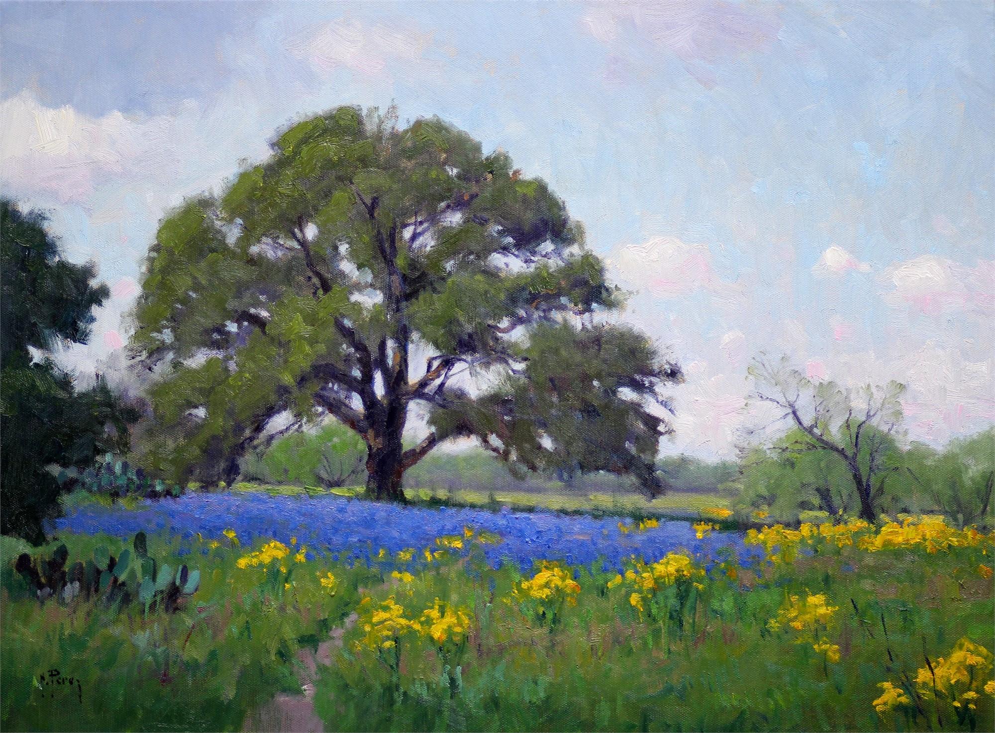 Spring Landscape by Noe Perez