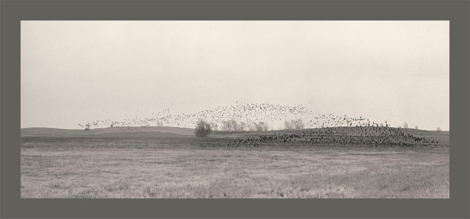 Blackbirds by E. Dan Klepper