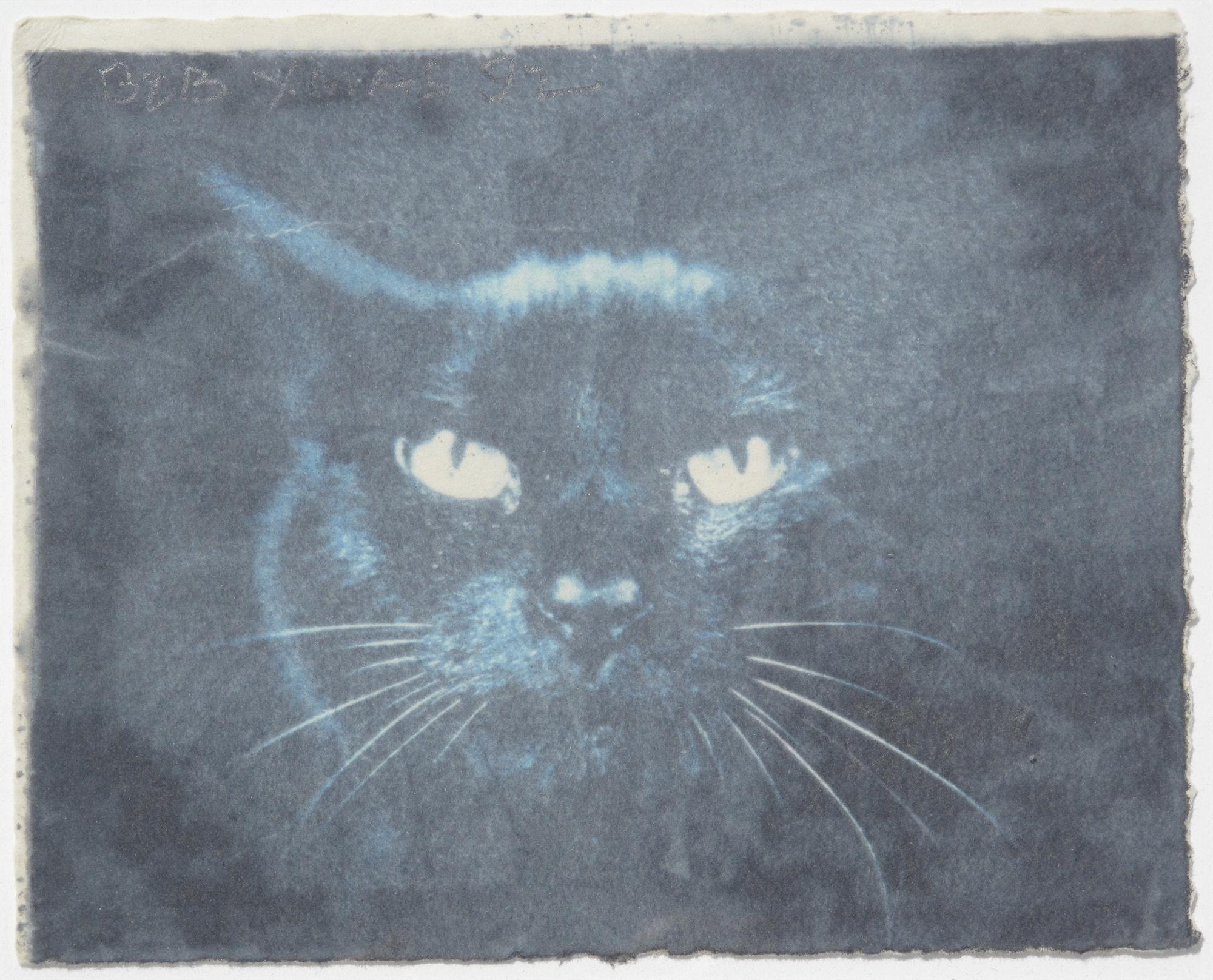 Black Cat by Robert Rauschenberg
