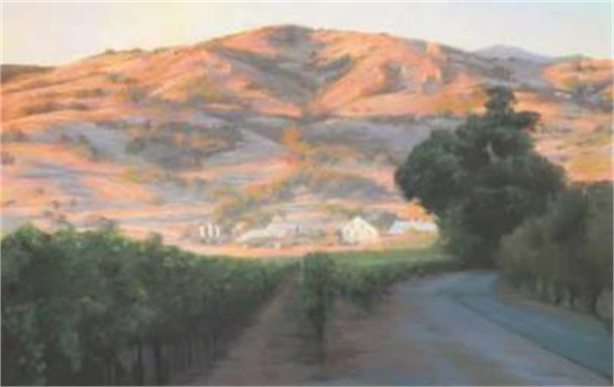 1877. Regusci Vineyards, Afternoon by Richard Schloss