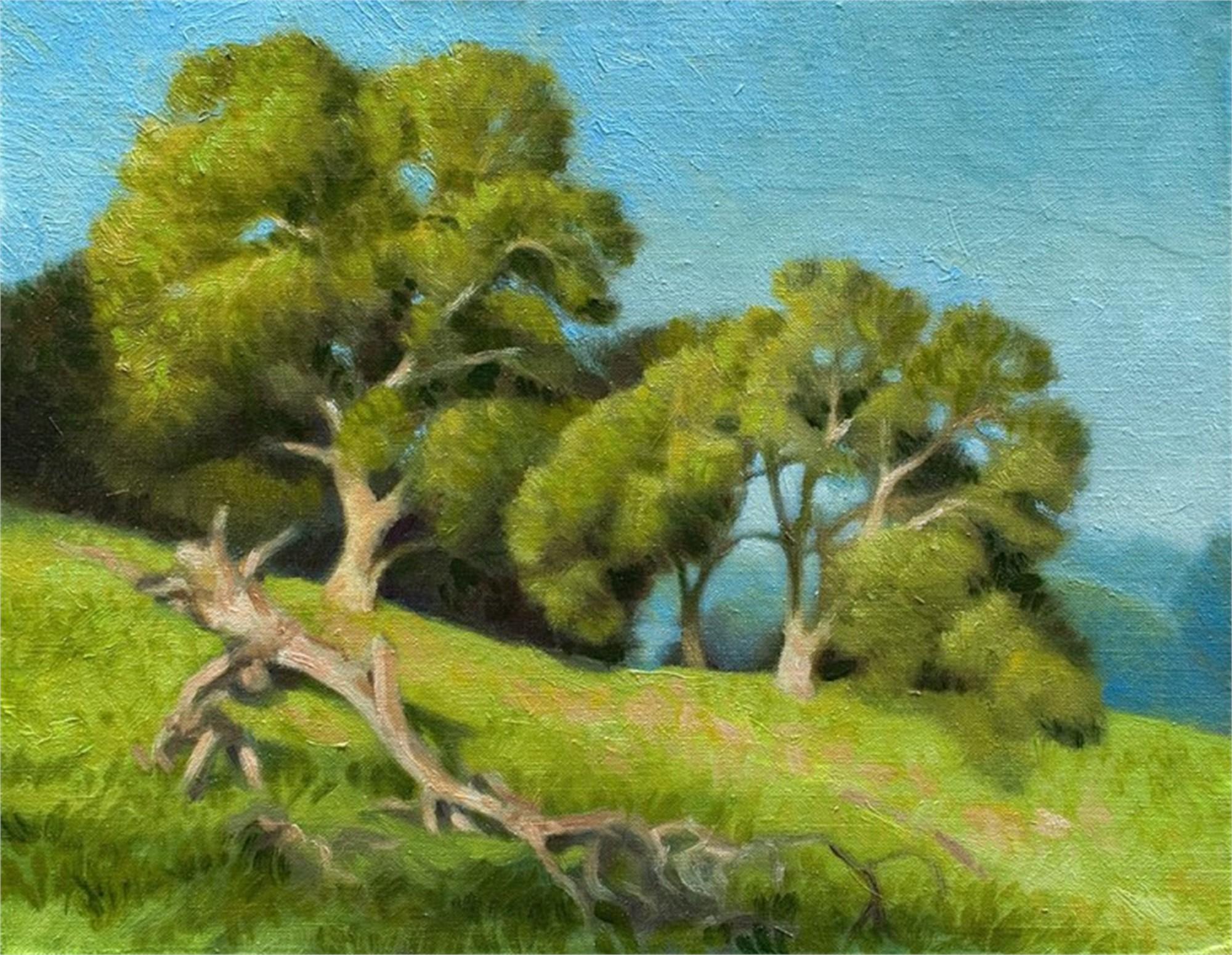 Oaks in Briones by Ocean Quigley