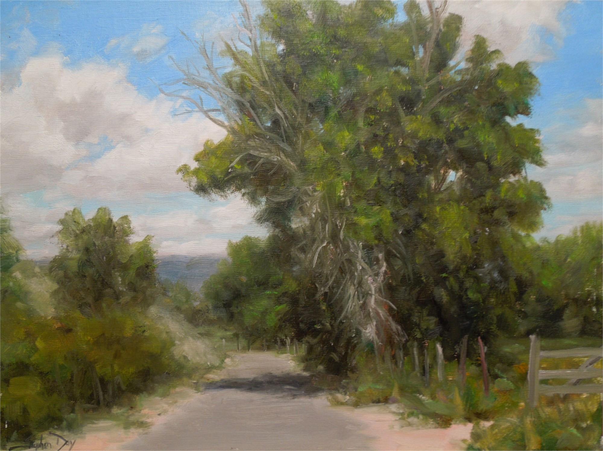 Roadside Cottonwoods by Stephen Day