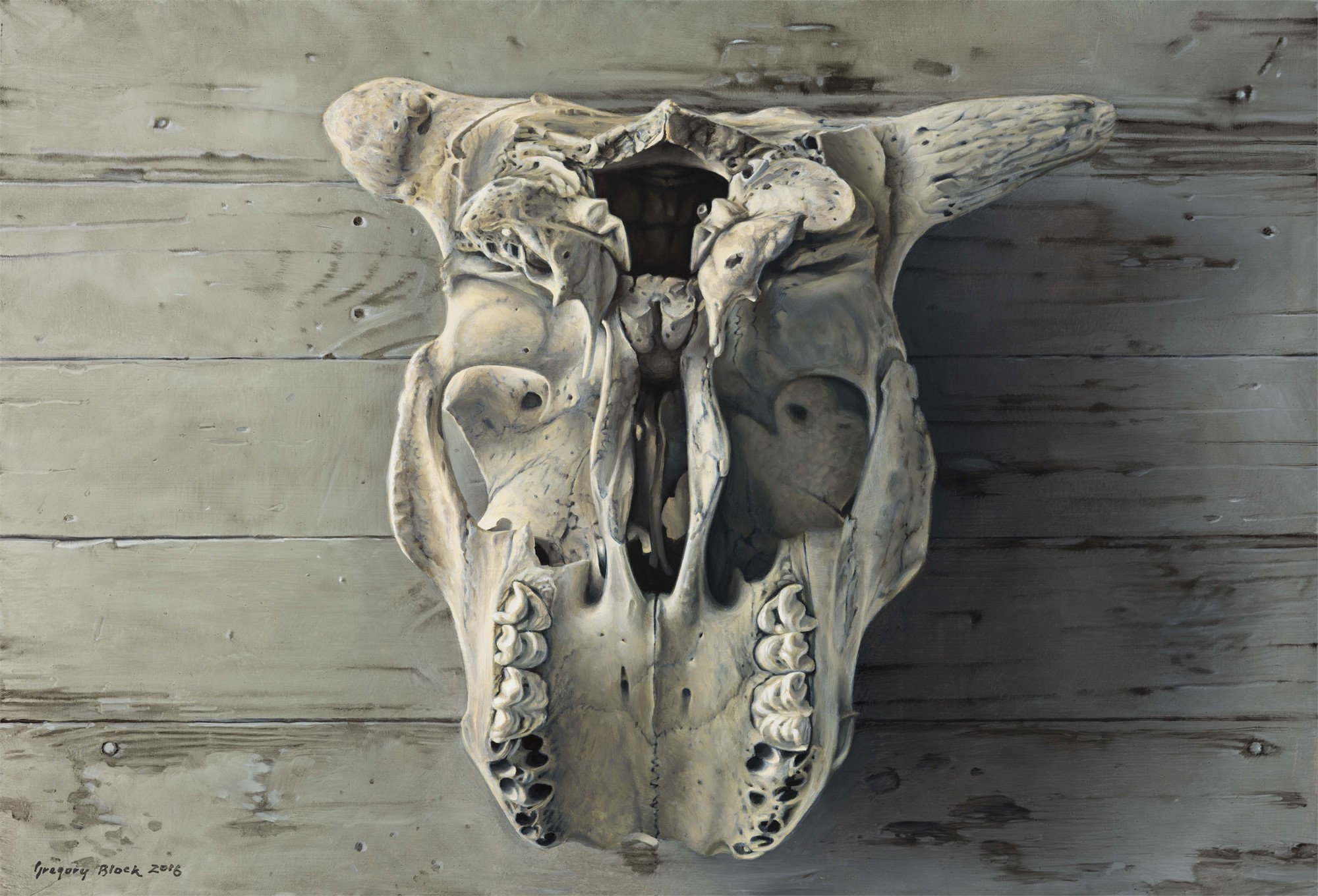 Cow Skull by Gregory Block