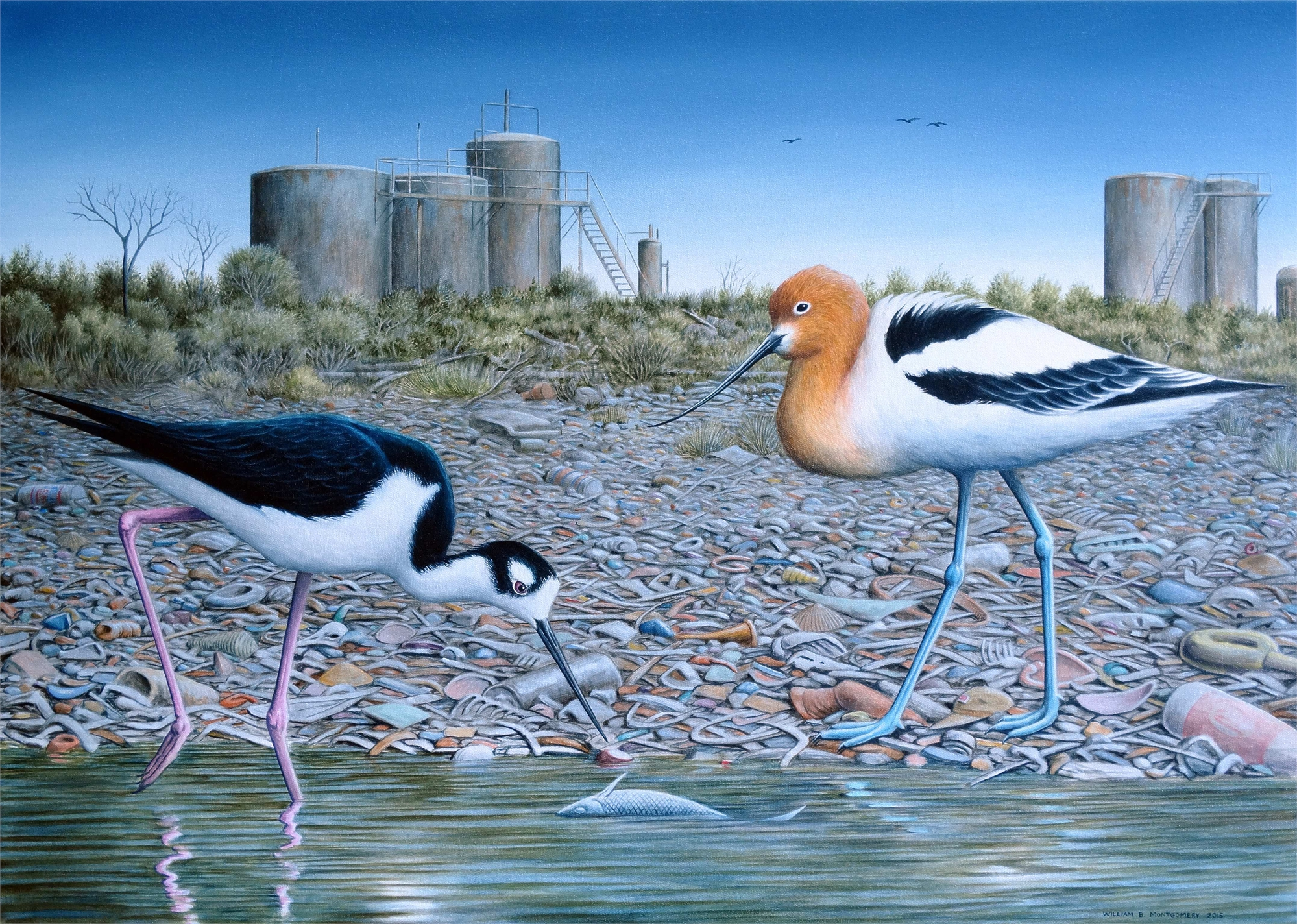 Stilt & Avocet by William B. Montgomery