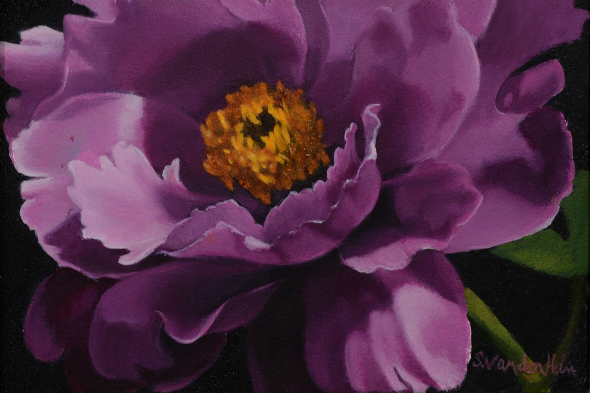 Purple Peony in Sunlight by Sarah van der Helm