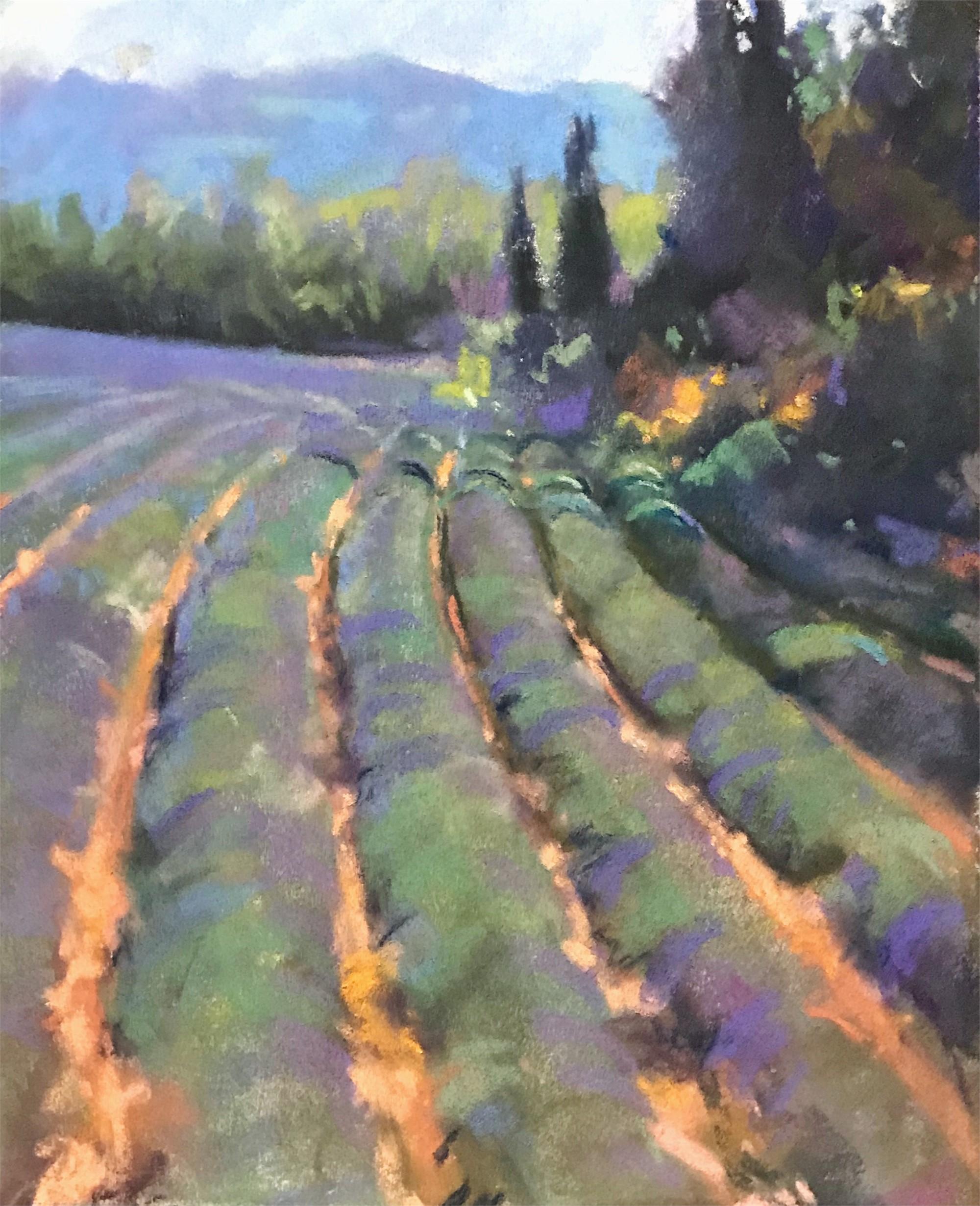 Roussillon Lavender by Bruce A Gómez