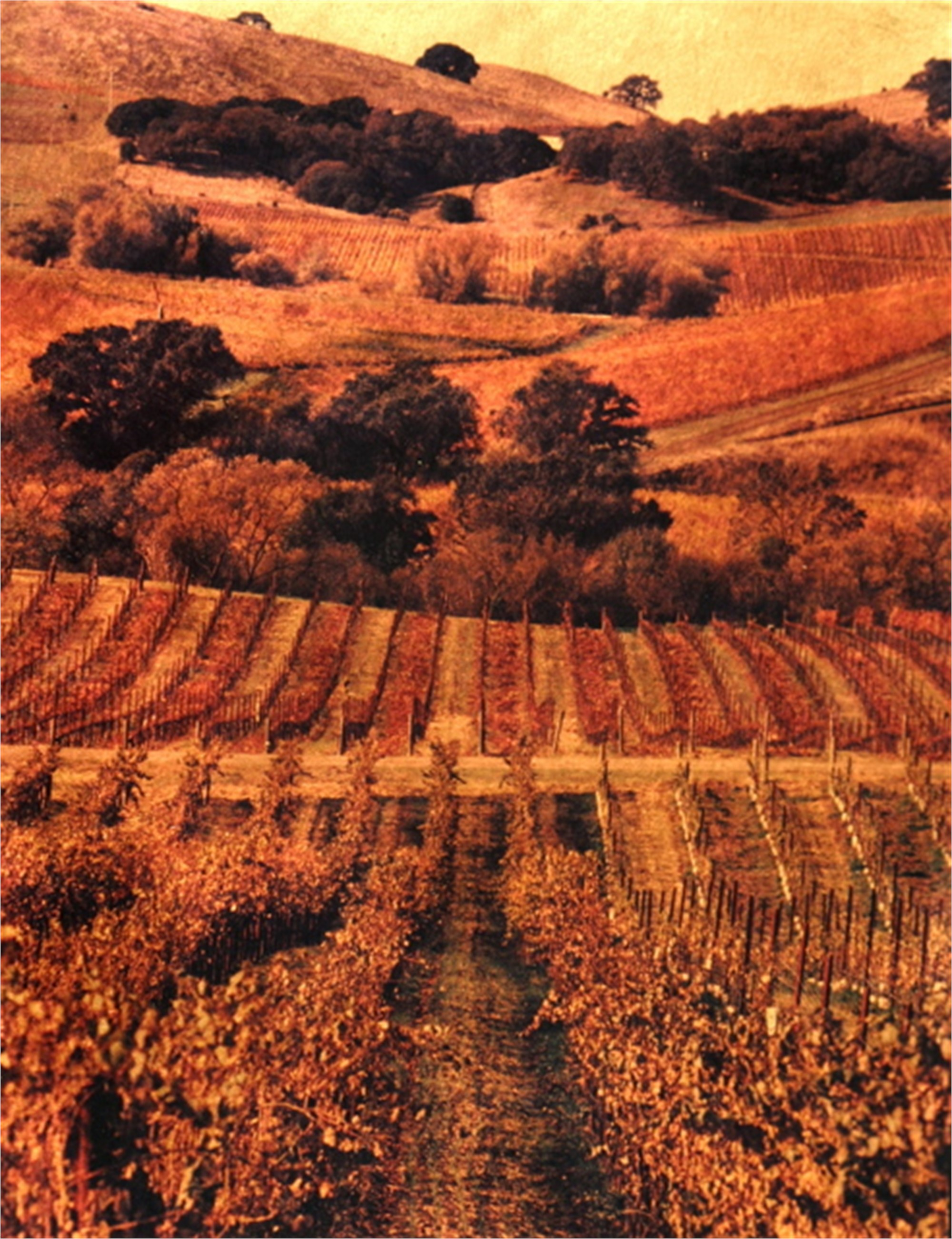 Wine Country Study #4 by Patty Mulligan