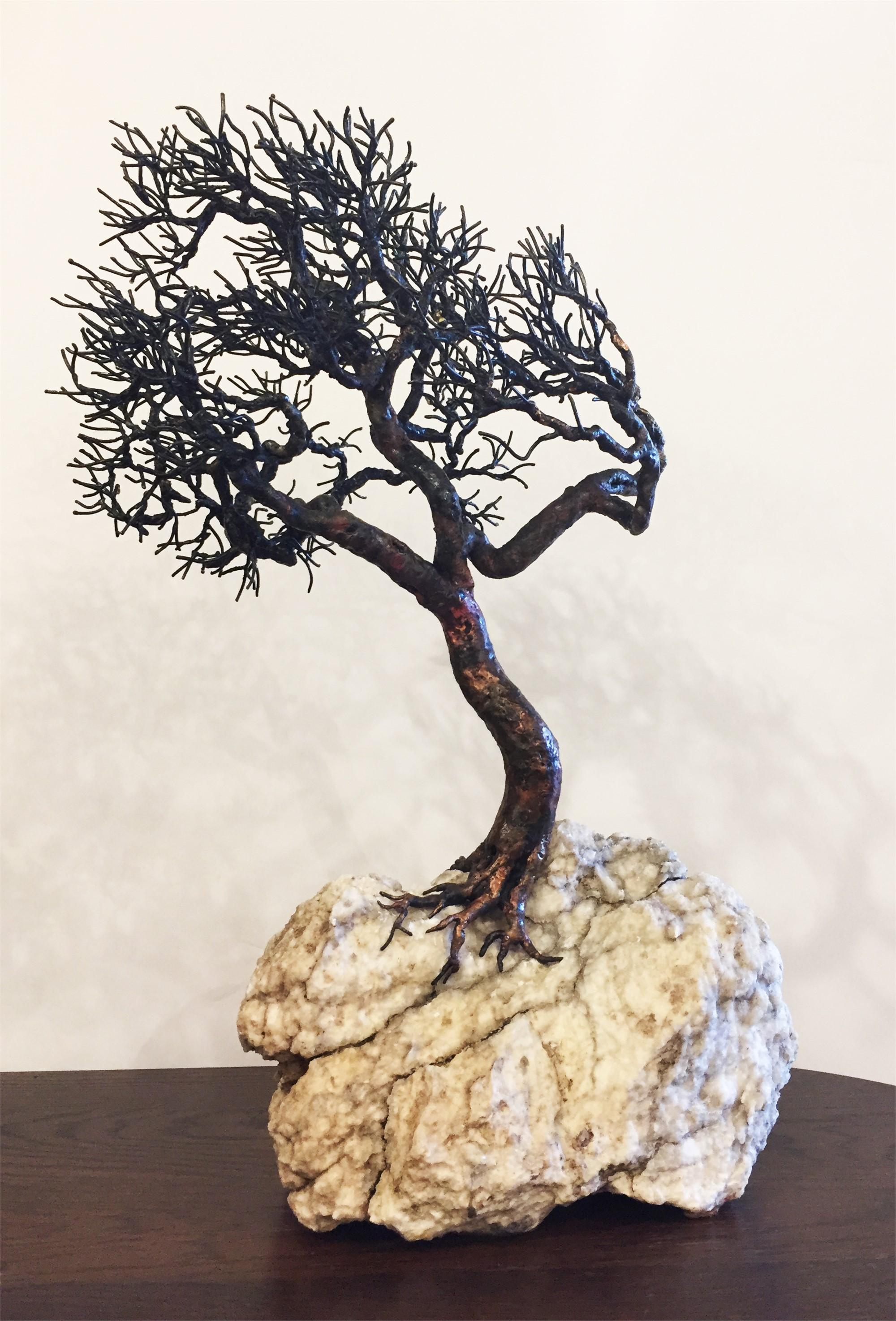High Plains Oak by Bill Webb