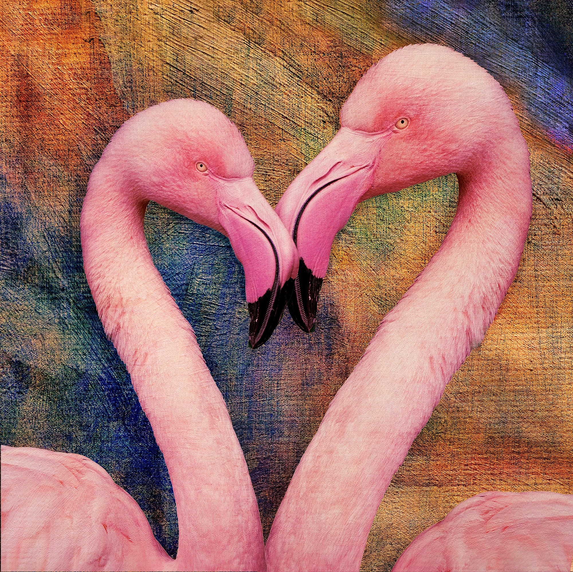 Flamingo Love by Bob Coates