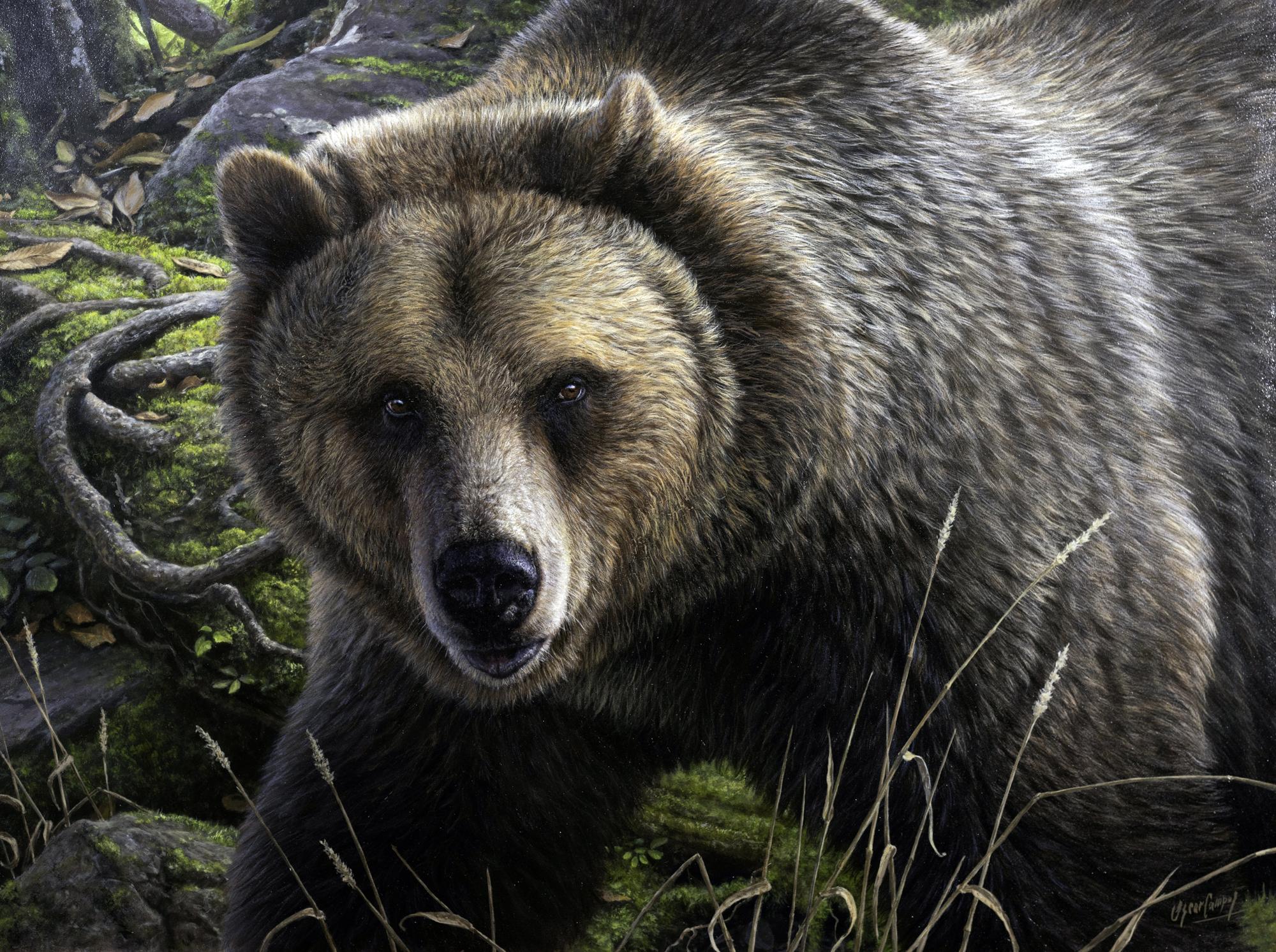 Grizzly en su Dominio Grizzly's Domain by Oscar Campos