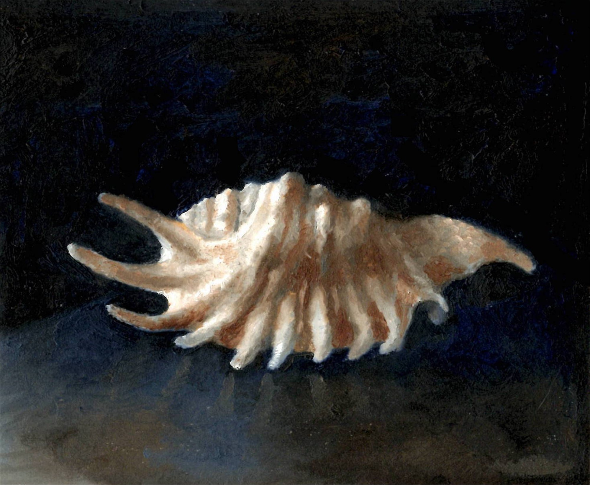 Shell Study by Julianna Wells