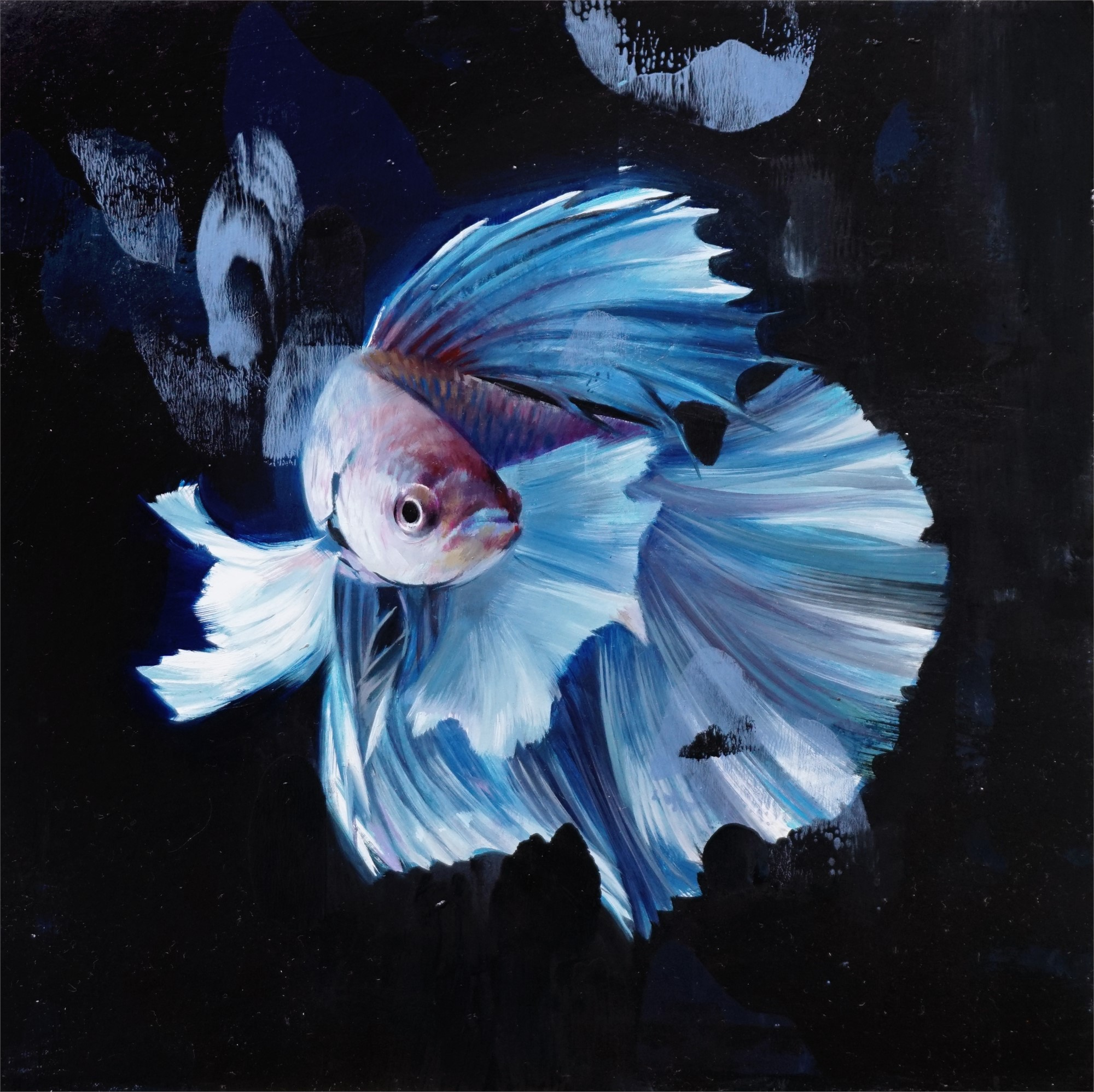Blue Betta by Alpay Efe