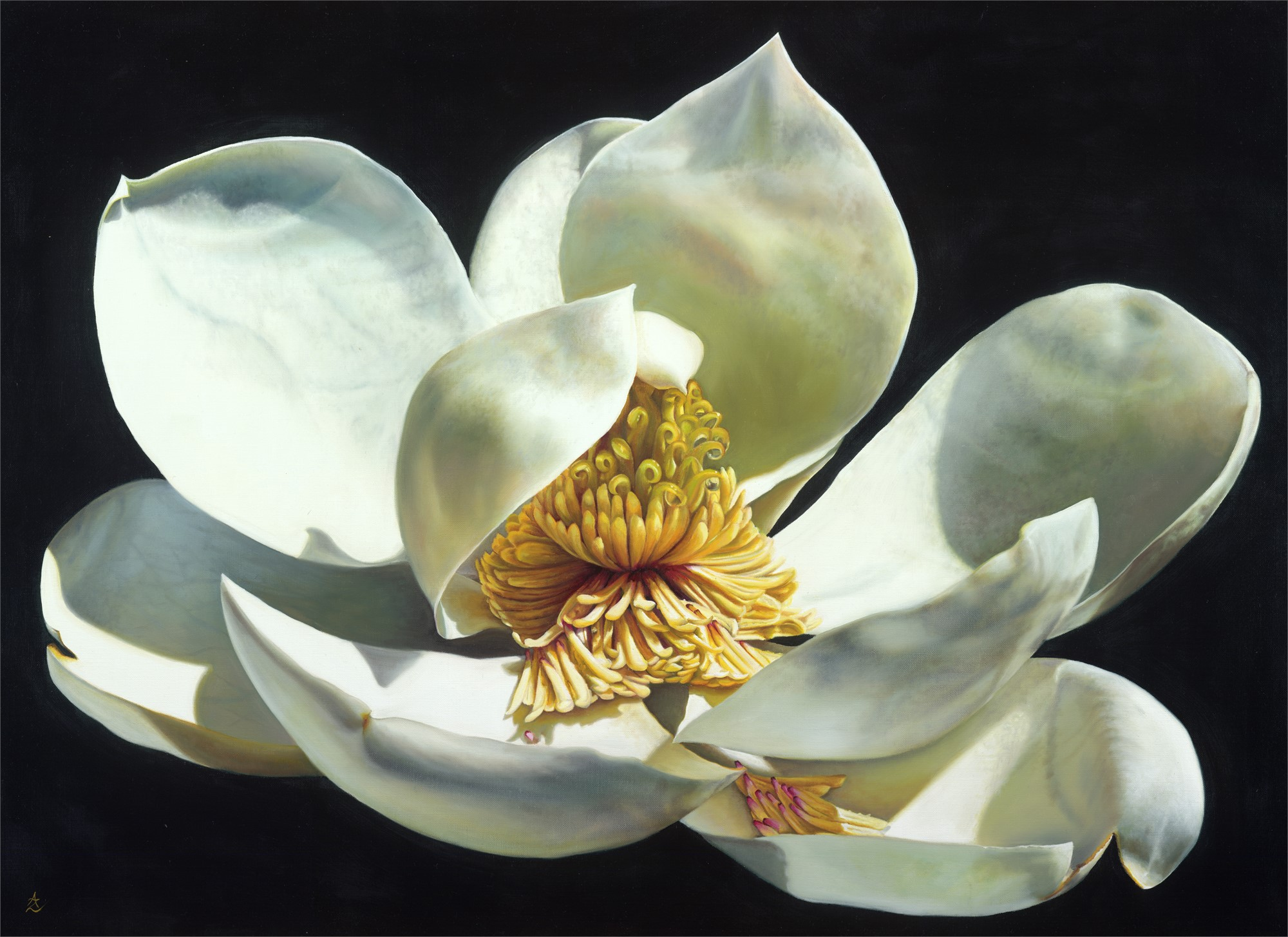 Magnolia Majesty by Anne-Marie Zanetti