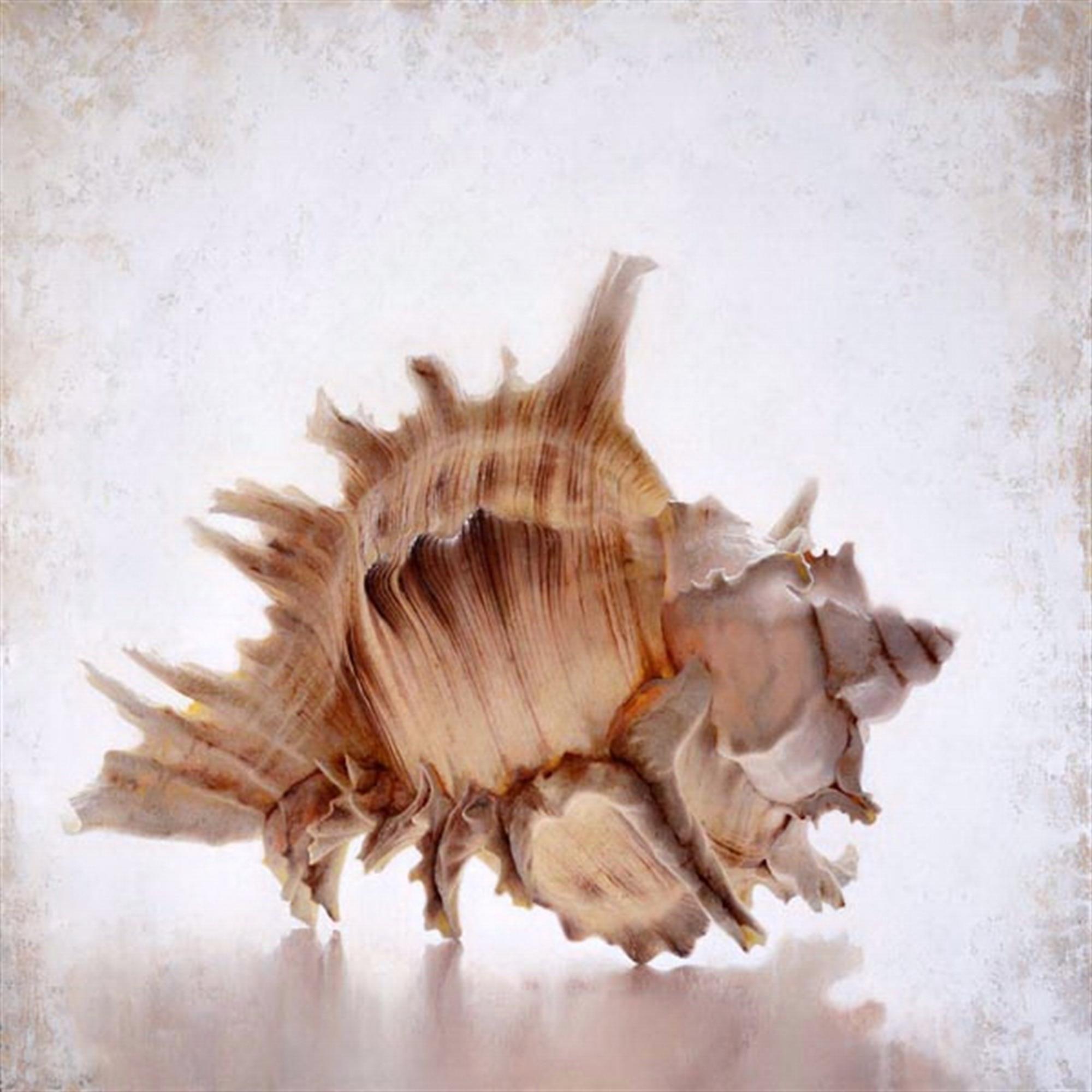 Lace Murex by Tatyana Klevenskiy