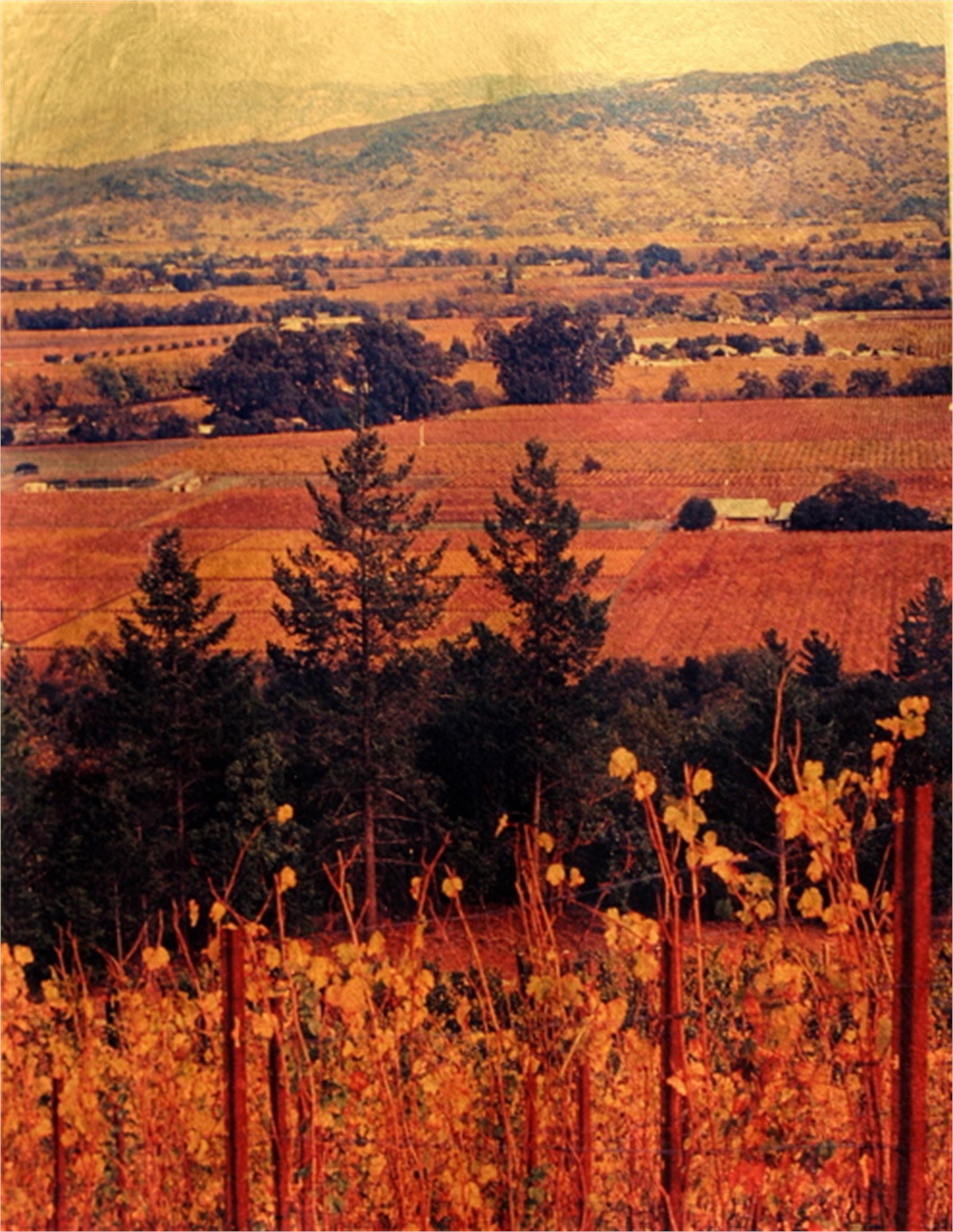 Wine Country Study #2 by Patty Mulligan