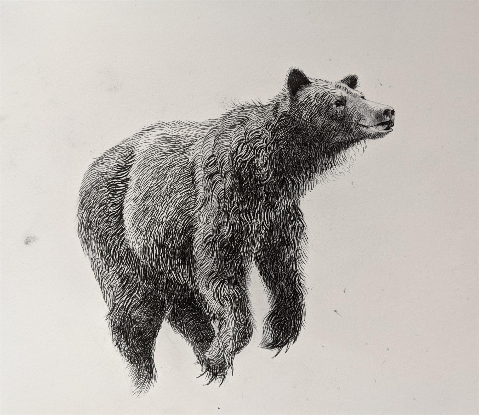 Bear II by Caitlin Hurd