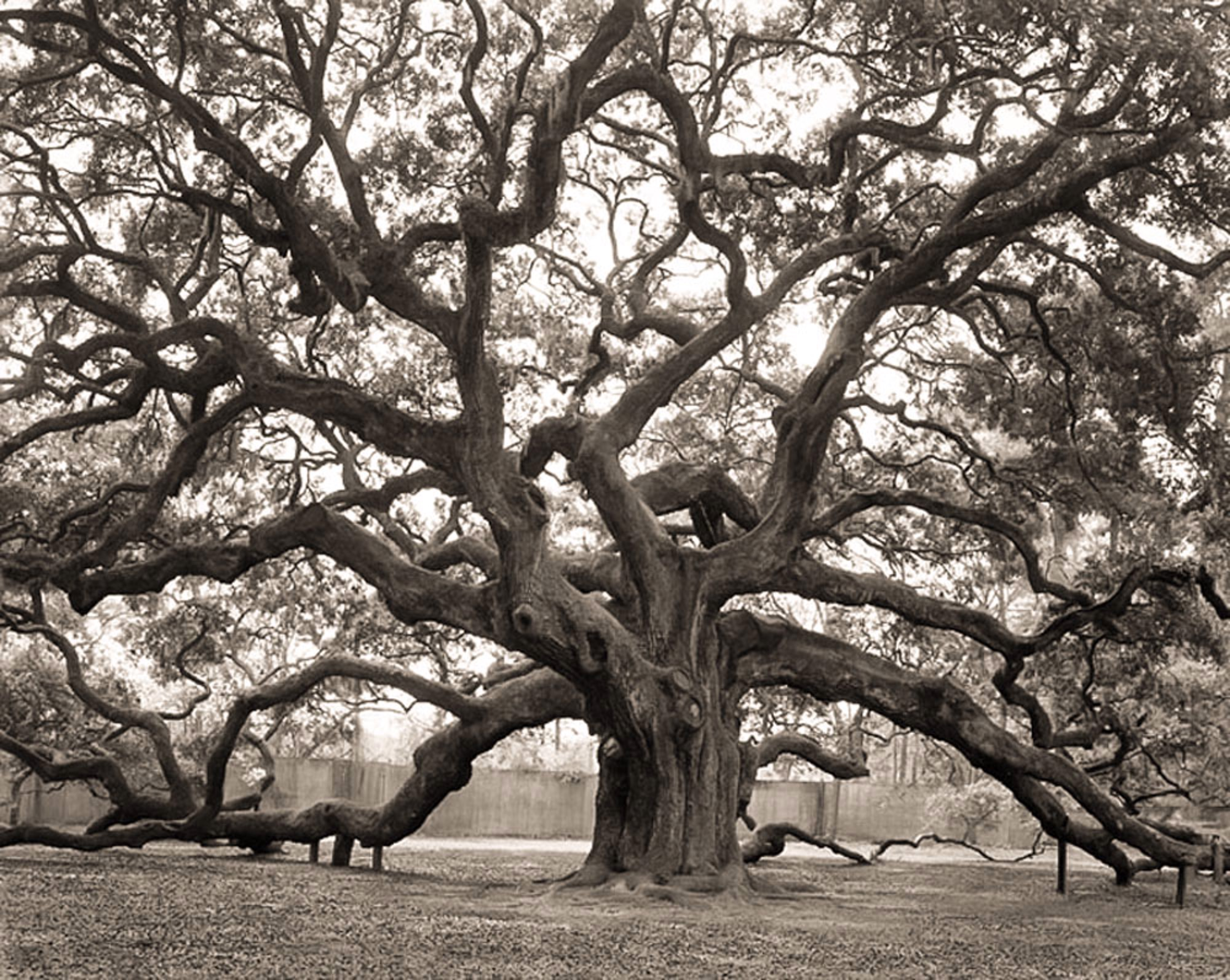 125) Angel Oak, Johns Island, South Carolina by Frank Hunter