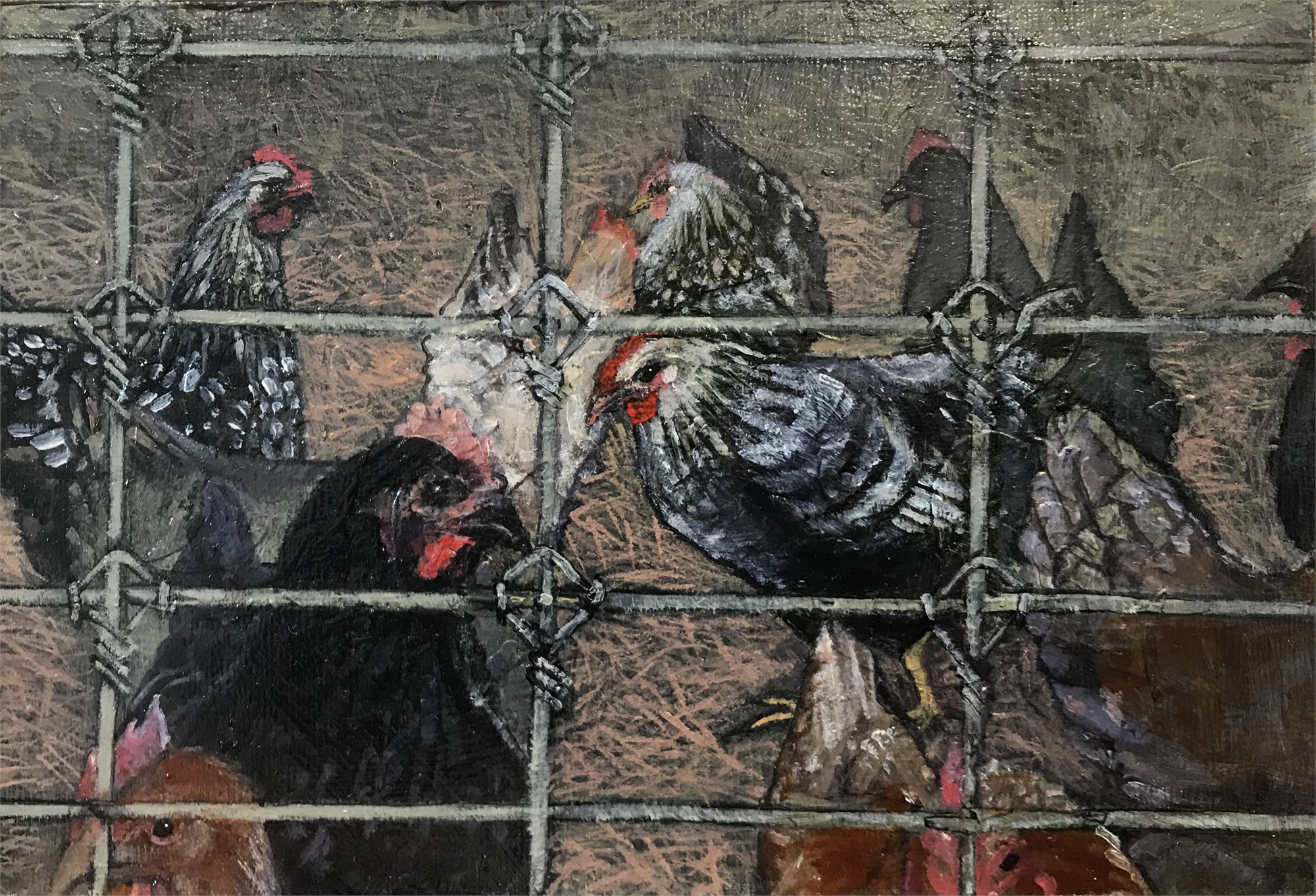 Chickens with Fence by Kris Engman | ArtCloud