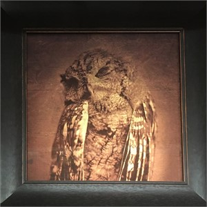 Screech Owl  (4/20), 2018