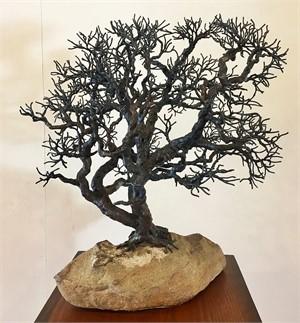 Sandbar Oak