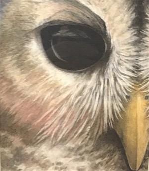 Black Eyed Owl, 2019