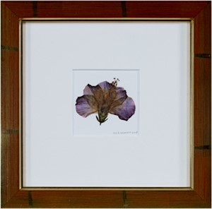 Hybrid Hibiscus II, 2005