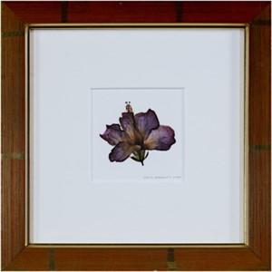 Hybrid Hibiscus I, 2005