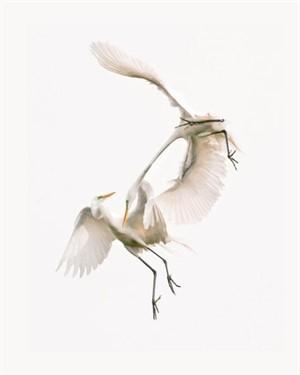 Audubons Passion
