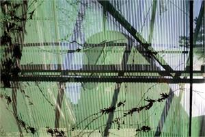 Greenhouse #6 (1/20)