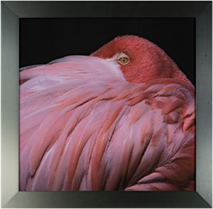 Pink Flamingo (close-up), 2006